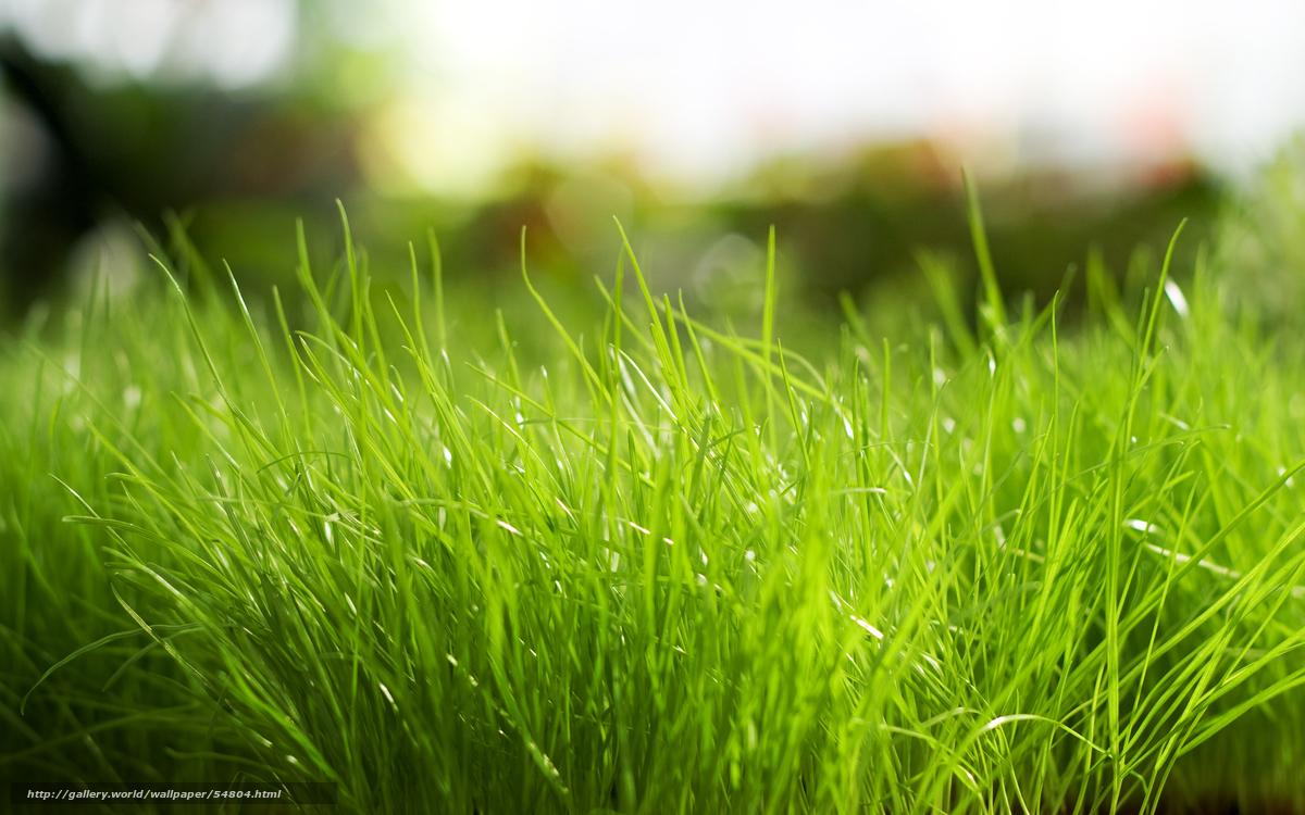 Scaricare Gli Sfondi Erba Verde Natura Sfondi Gratis Per La