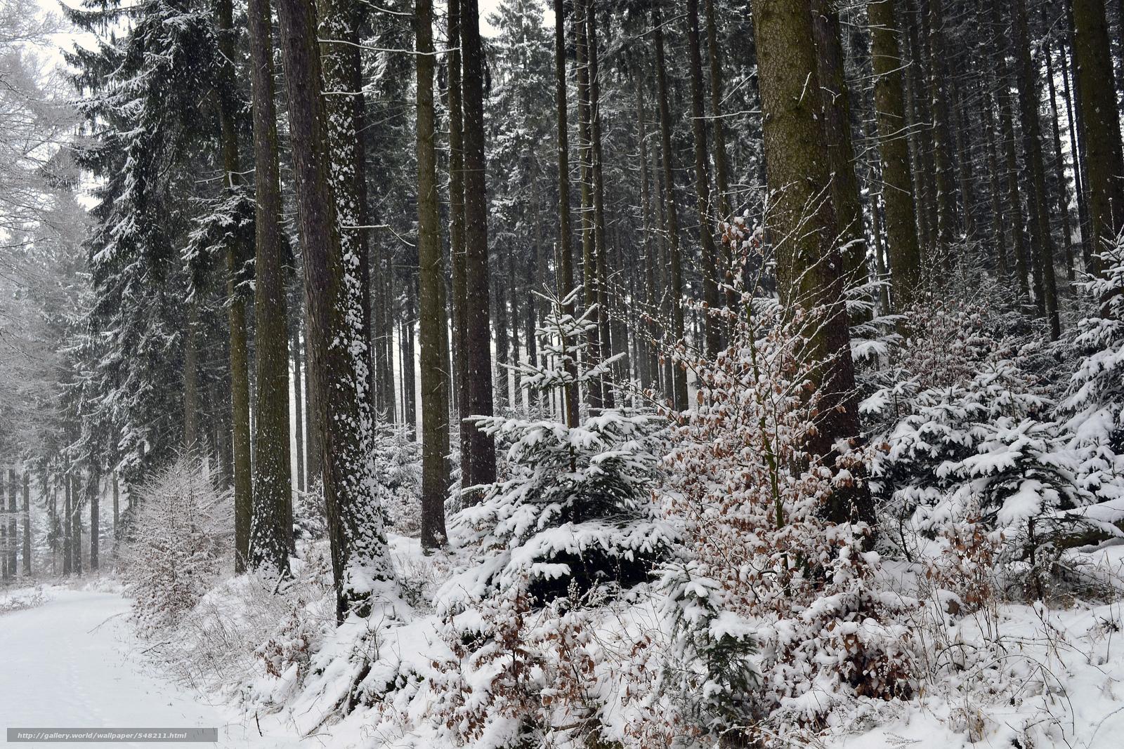 壁紙をダウンロード 冬,  森,  木,  自然 デスクトップの解像度のための無料壁紙 4608x3072 — 絵 №548211