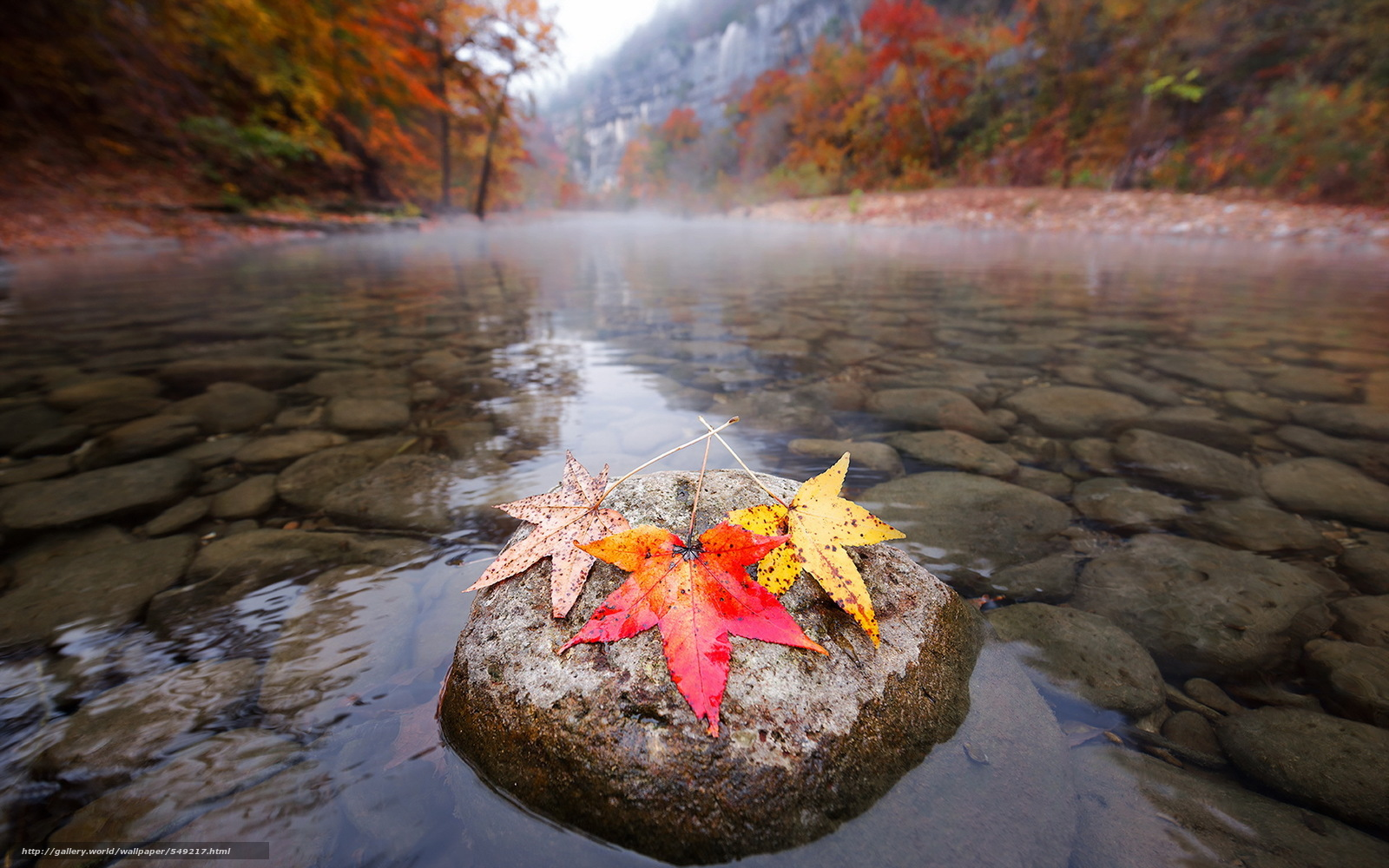 Download wallpaper autumn,  fall,  nature,  river free desktop wallpaper in the resolution 1920x1200 — picture №549217