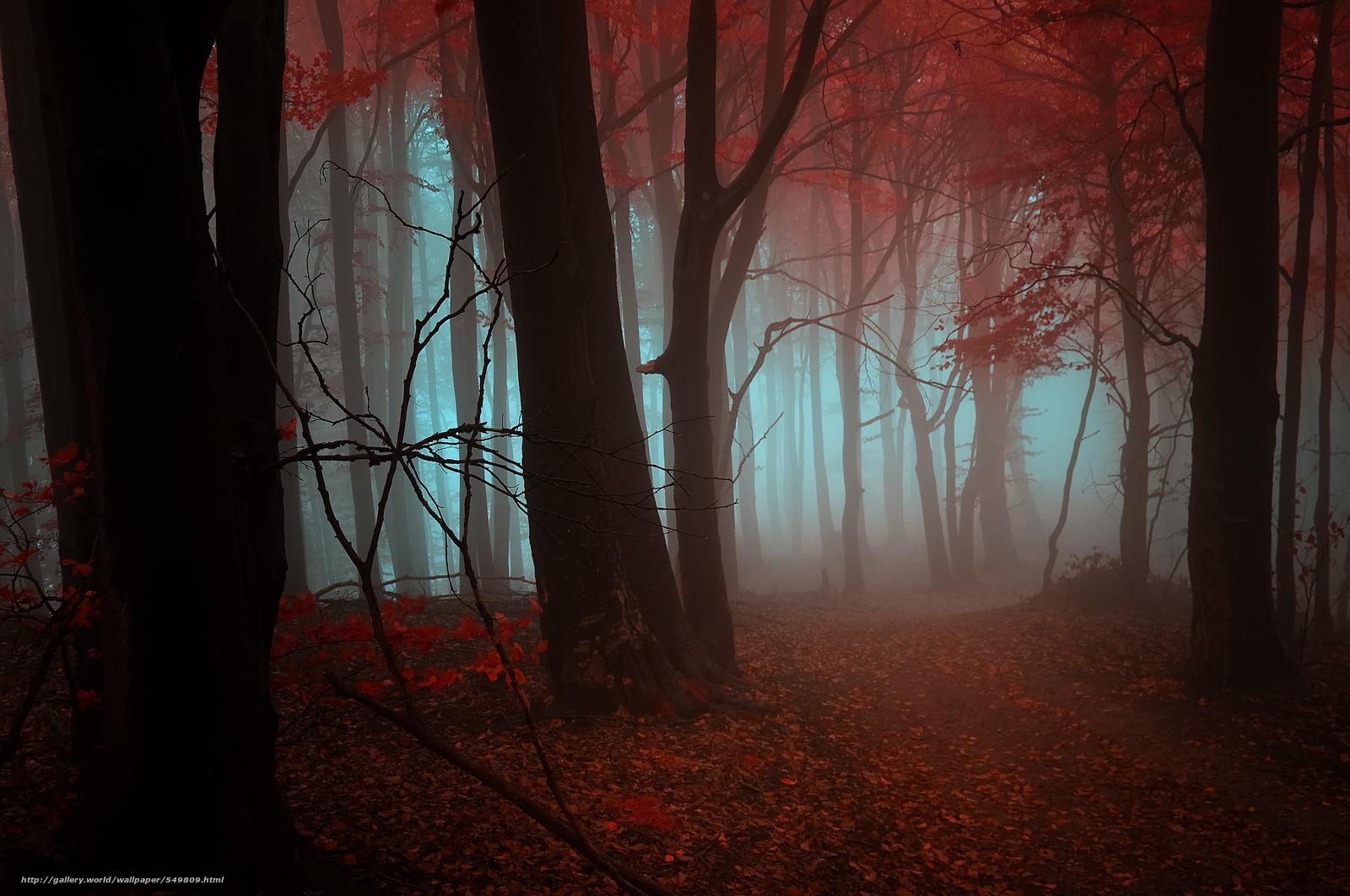 Скачать обои осень,  деревья,  туман,  пейзаж бесплатно для рабочего стола в разрешении 3306x2195 — картинка №549809