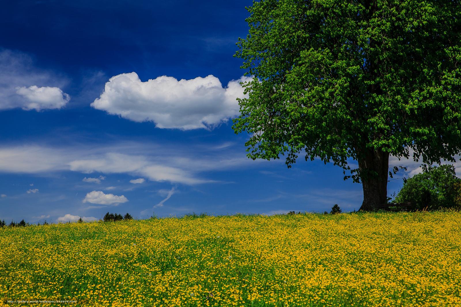 Tlcharger fond d 39 ecran arbre prairie t paysage fonds for Fond ecran ete paysage