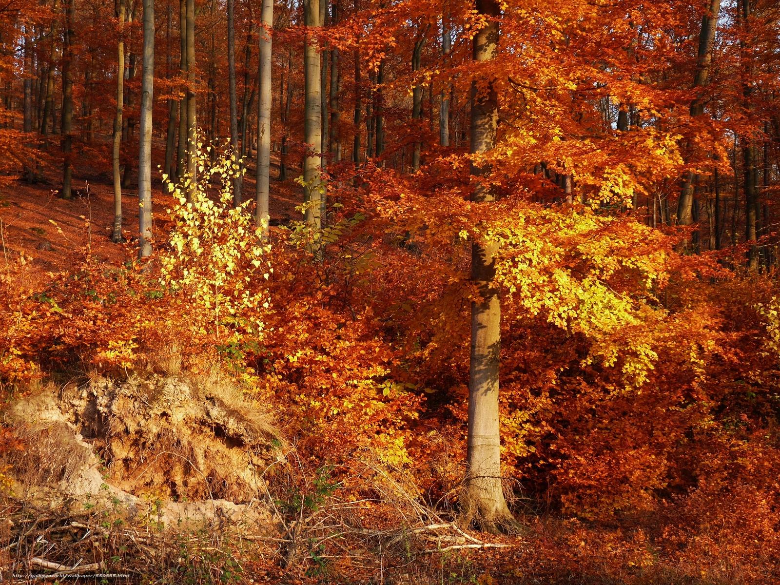 foto de Tlcharger Fond d'ecran automne, forêt, arbres, paysage Fonds d ...