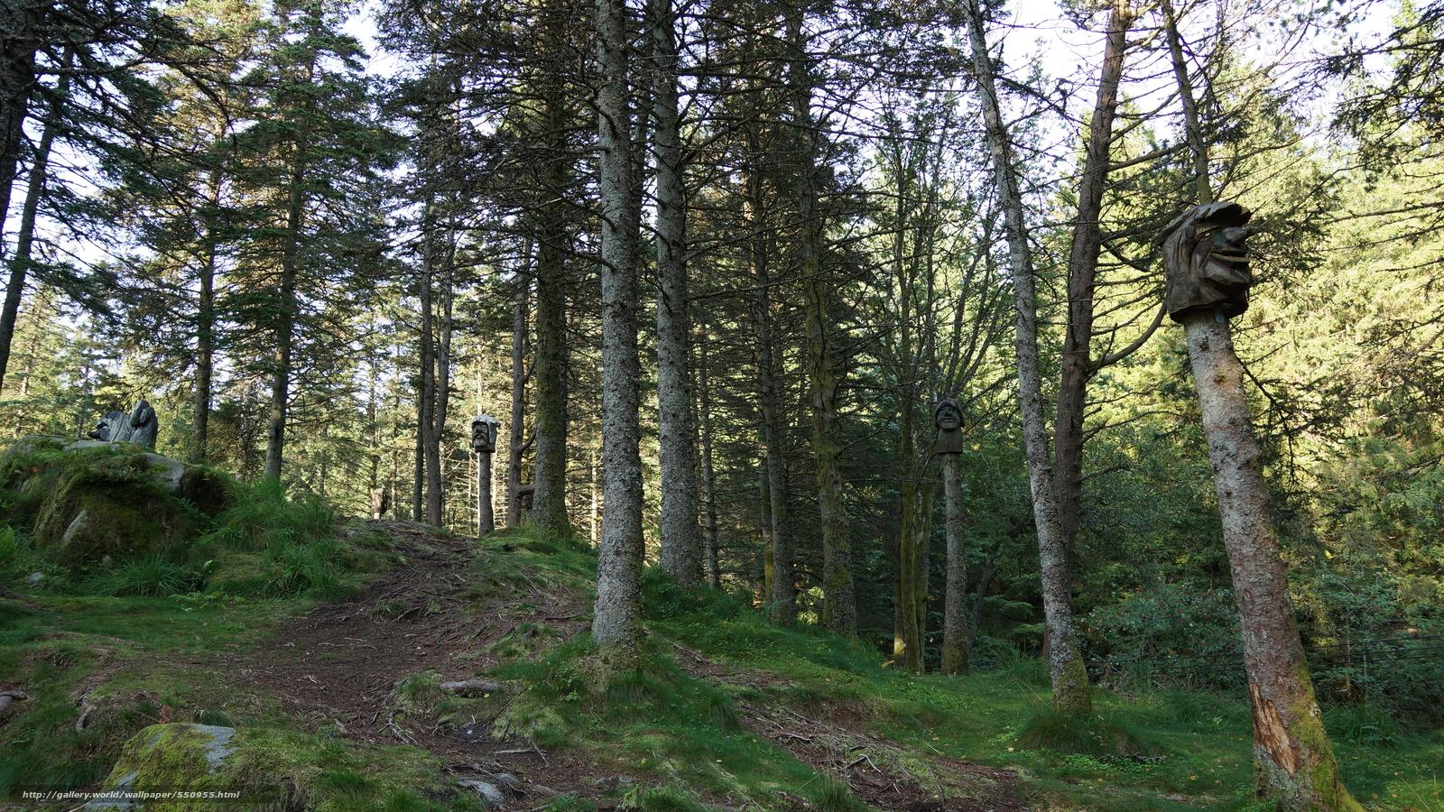Tlcharger Fond d'ecran forêt,  arbres,  paysage Fonds d'ecran gratuits pour votre rsolution du bureau 6000x3376 — image №550955