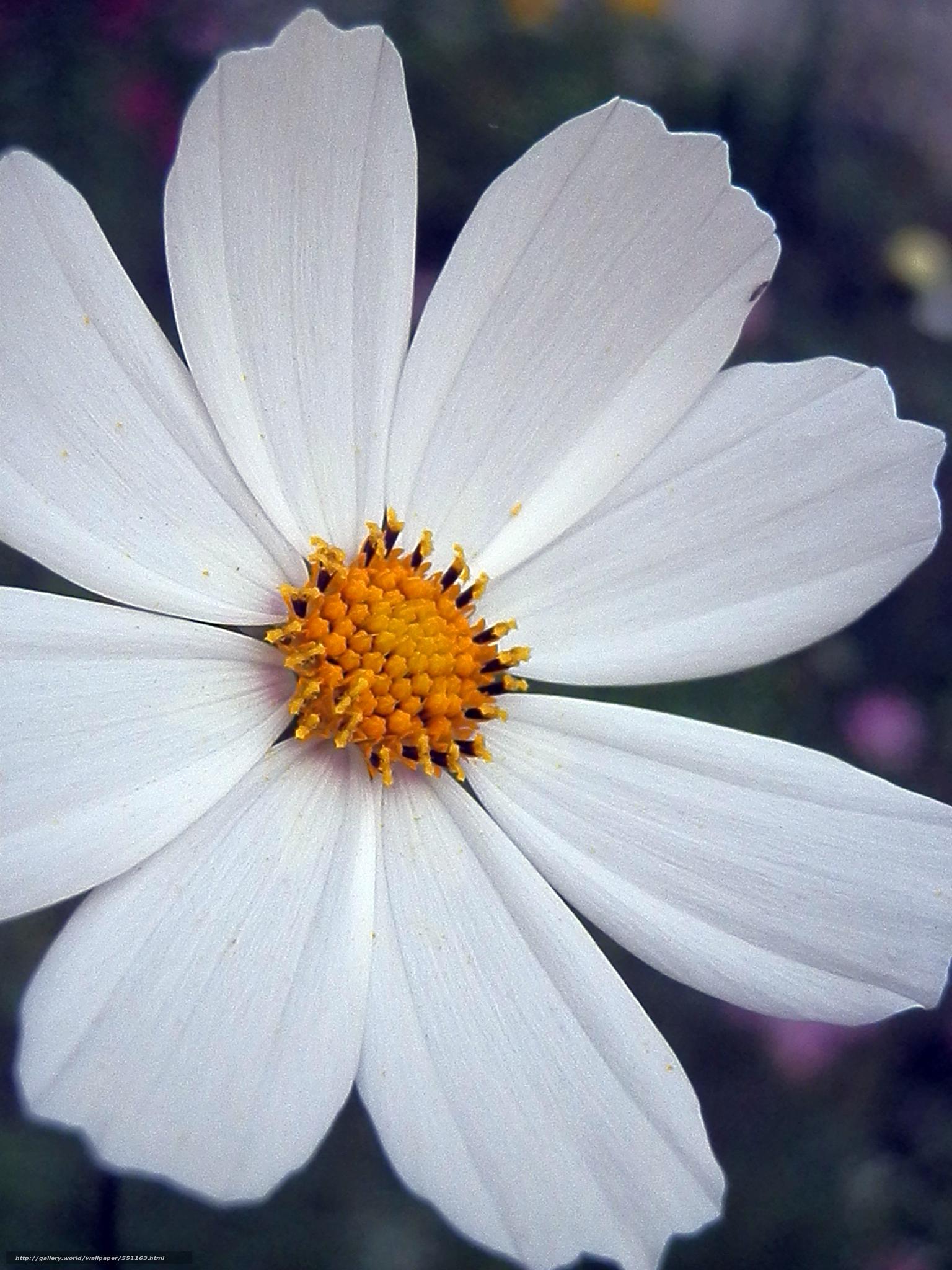 Обои лето, яркость, цветы. Цветы foto 10