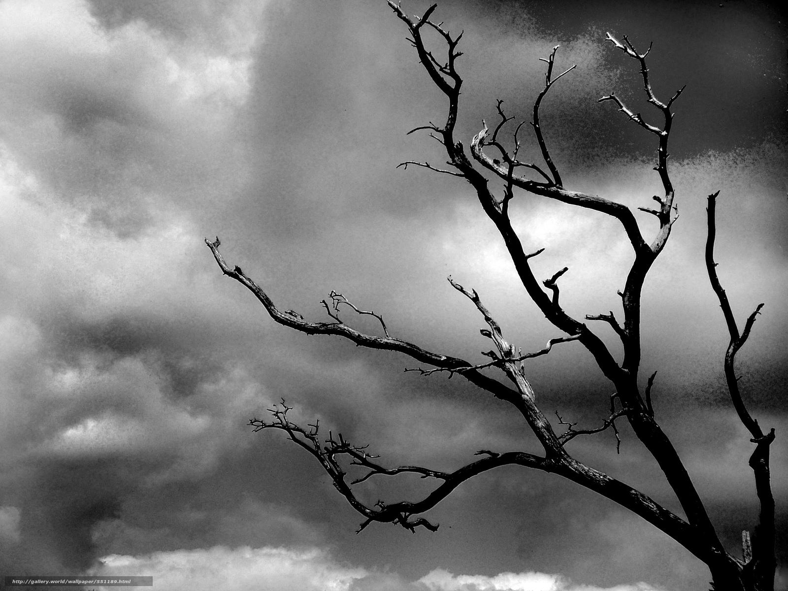 Download wallpaper Depression,  black-white,  tree,  cloud free desktop wallpaper in the resolution 2848x2136 — picture №551189