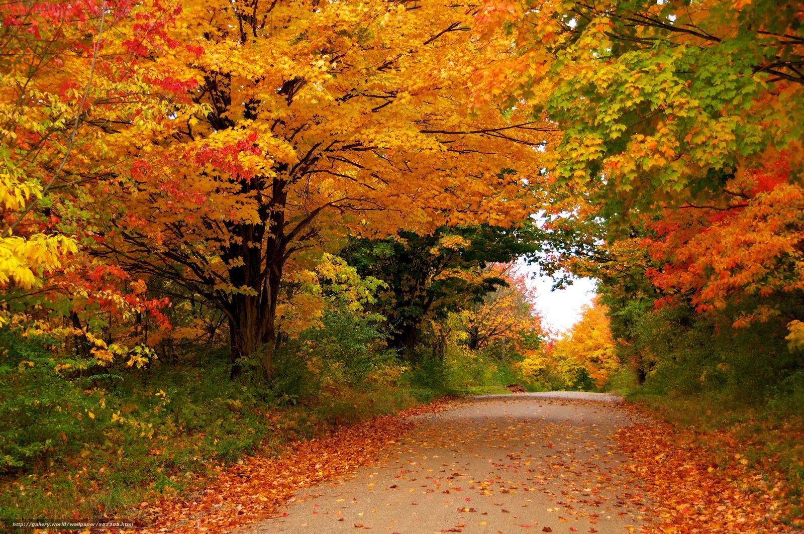 Scaricare gli sfondi autunno stradale alberi paesaggio for Autunno sfondi desktop