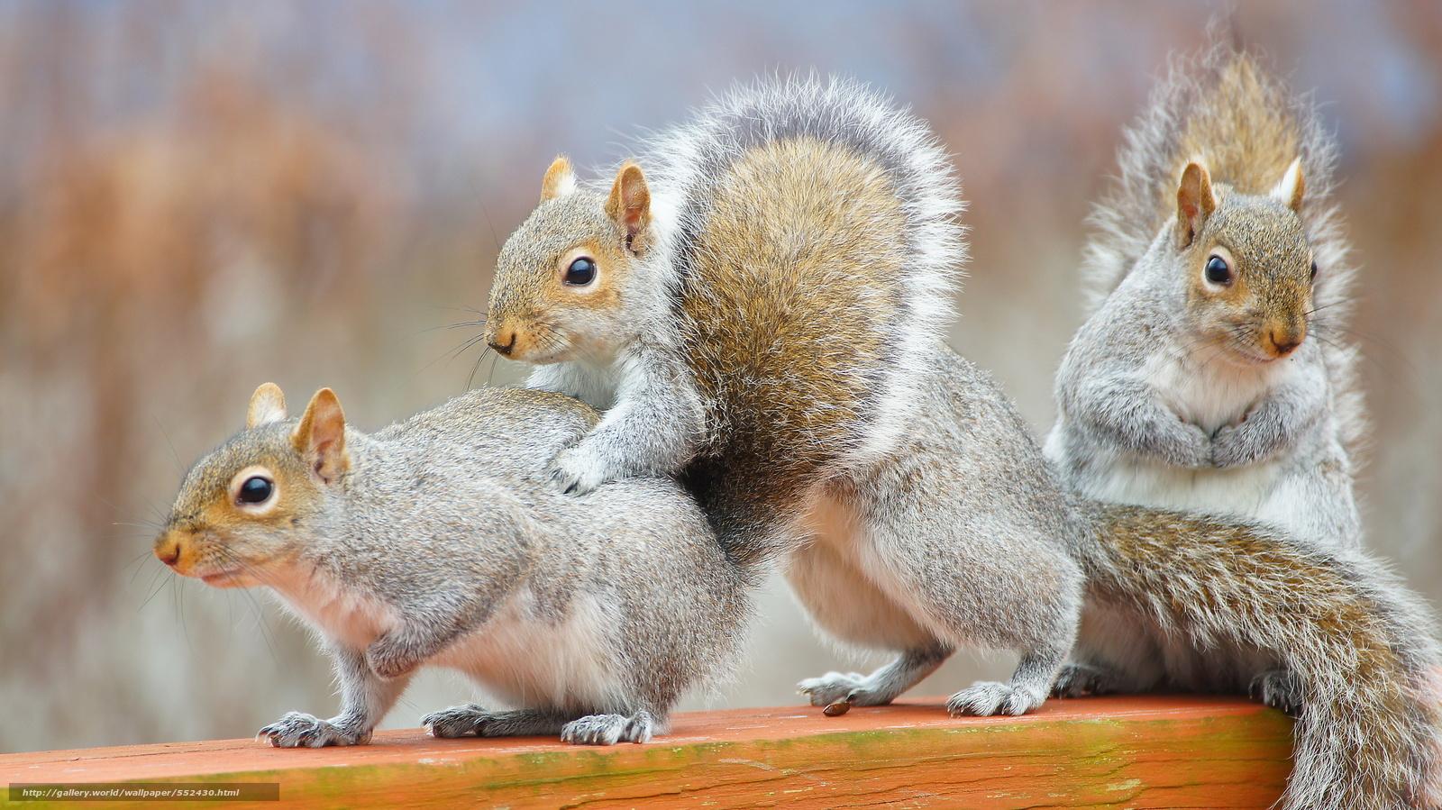 Скачать обои белки,  животные,  грызуны бесплатно для рабочего стола в разрешении 4912x2760 — картинка №552430