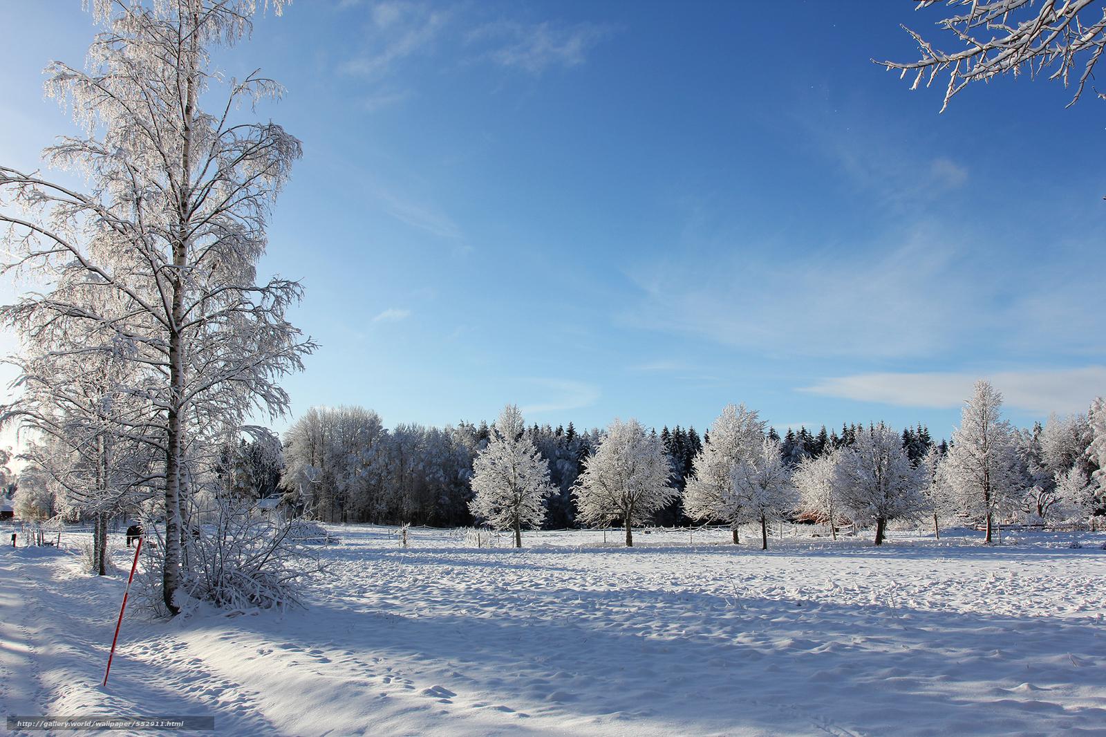 scaricare gli sfondi inverno,  alberi,  paesaggio Sfondi gratis per la risoluzione del desktop 2048x1365 — immagine №552911