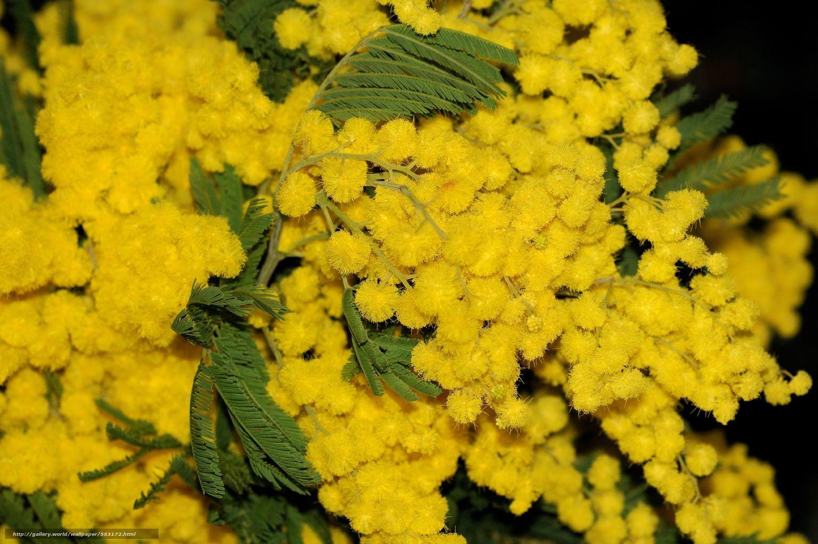 Весна  фотообои флизелиновые