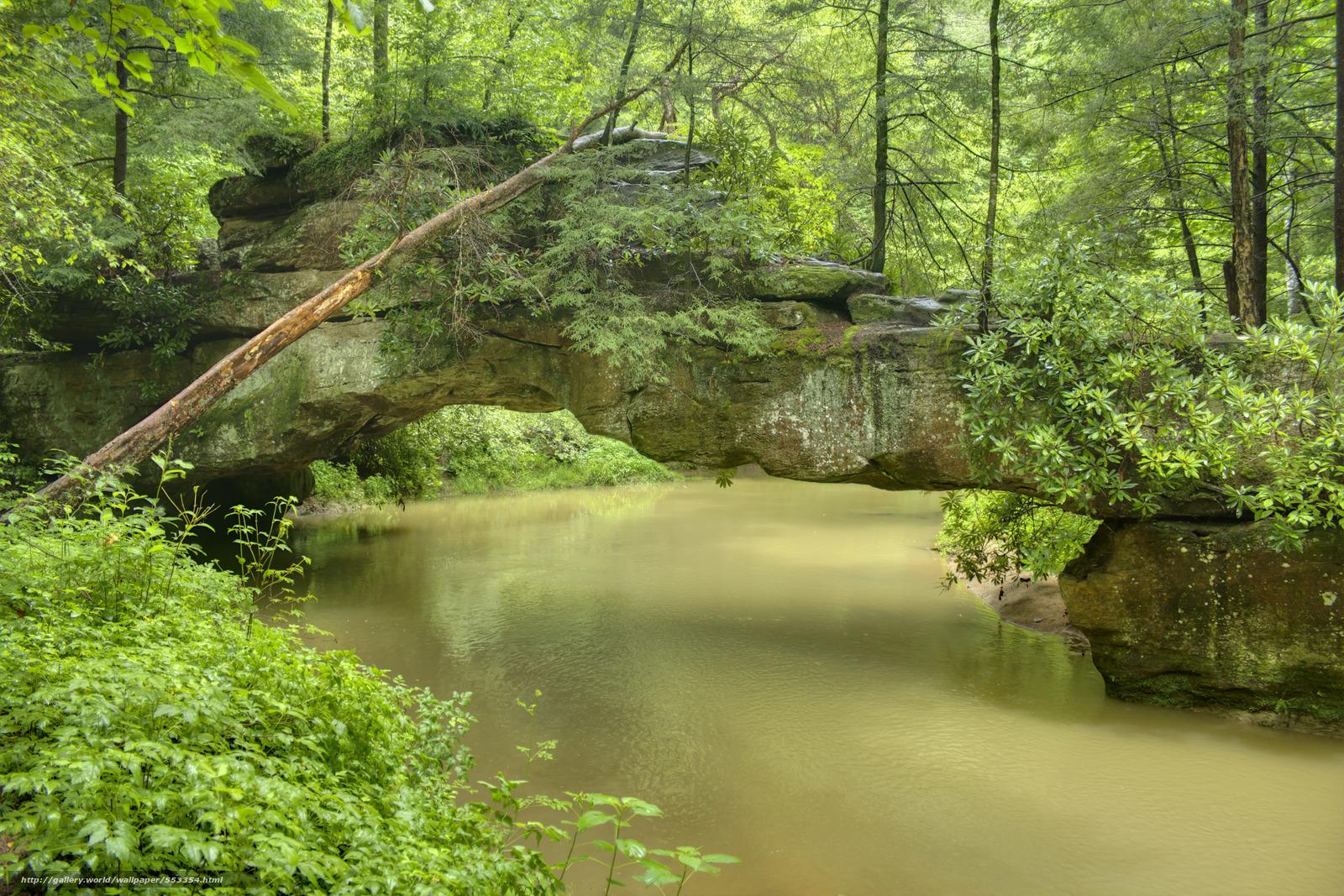 下载壁纸 森林,  河,  岩石,  树 免费为您的桌面分辨率的壁纸 5183x3455 — 图片 №553354
