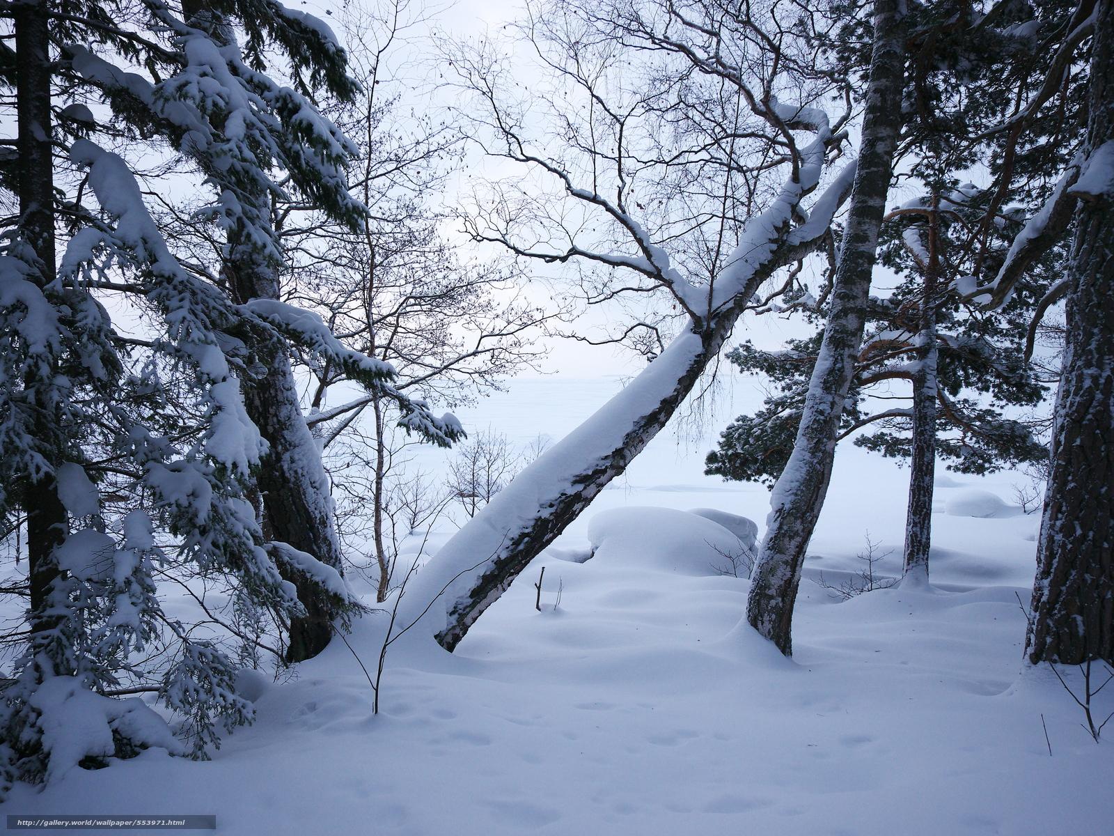 Tlcharger Fond d'ecran hiver,  arbres,  nature Fonds d'ecran gratuits pour votre rsolution du bureau 4608x3456 — image №553971