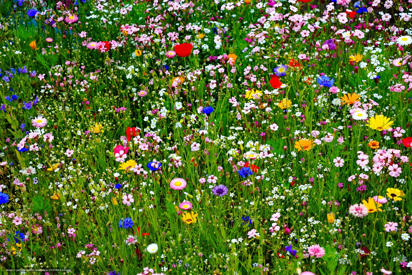 Download wallpaper field, Flowers, plants, flora free desktop ...: gde-fon.com/download/field_flowers_plants_flora/554990/5184x3456