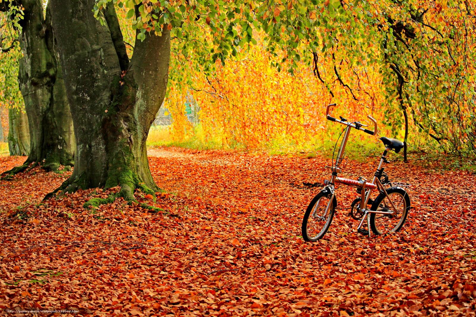 Золотая осень фото на великах осенью 6