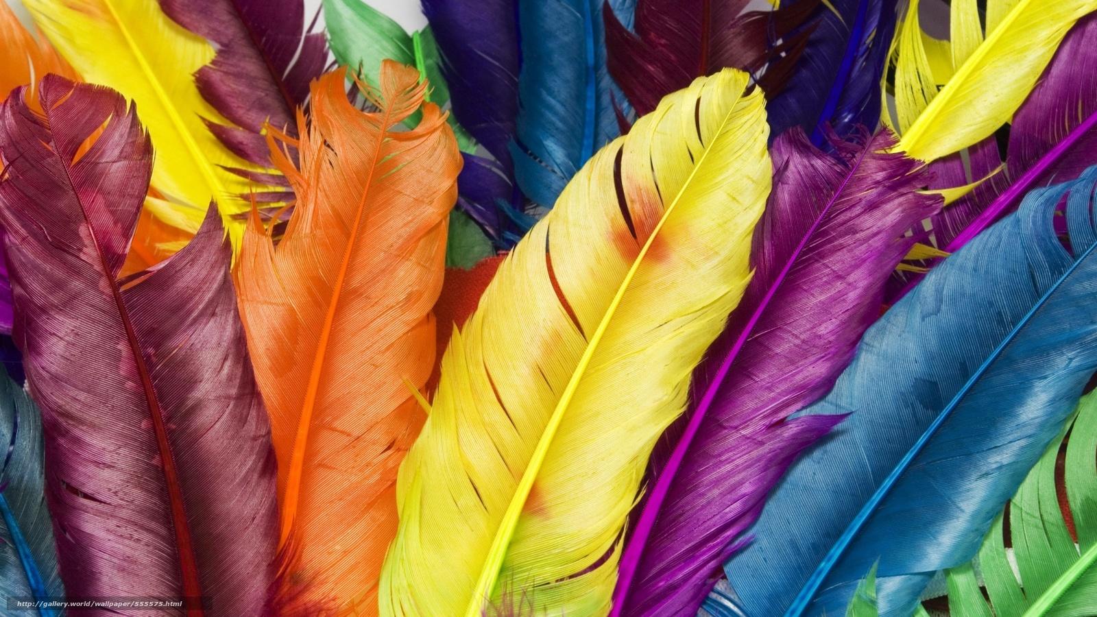 Скачать обои перья,  цвет,  радуга бесплатно для рабочего стола в разрешении 1920x1080 — картинка №555575