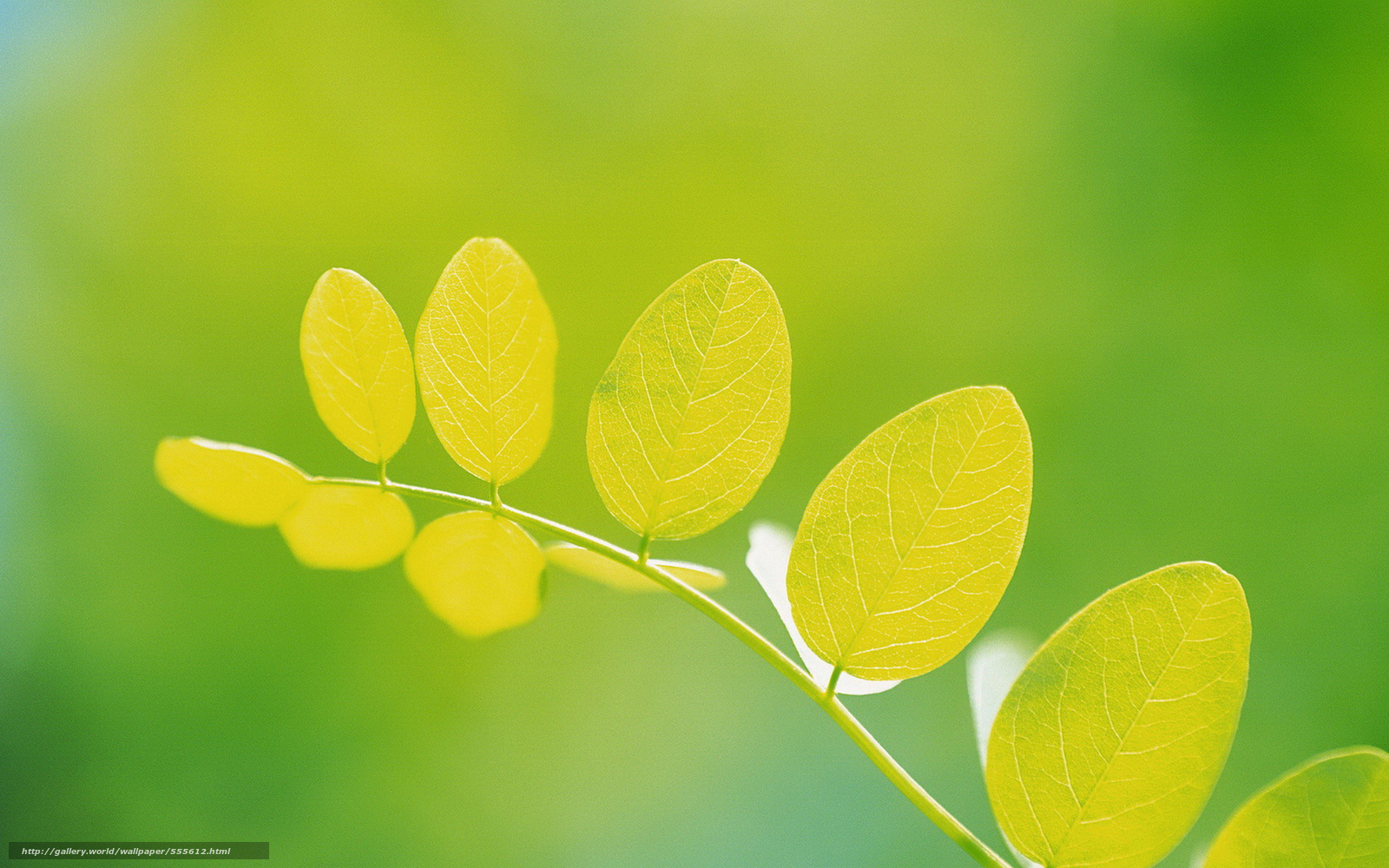 Скачать обои лист,  ветка,  зелень,  свет бесплатно для рабочего стола в разрешении 1920x1200 — картинка №555612
