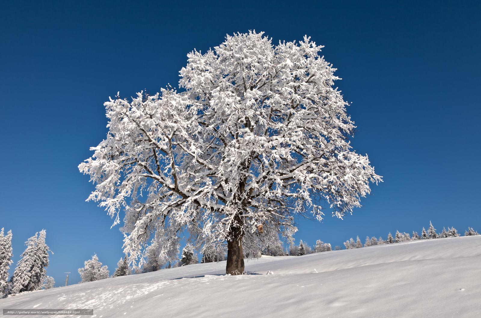 Scaricare Gli Sfondi Inverno Albero Alberi Paesaggio Sfondi
