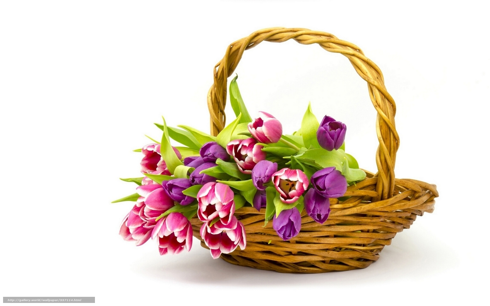 Download Wallpaper Nature Flowers Flower Basket Free Desktop In The Resolution 1920x1200 Picture No557114