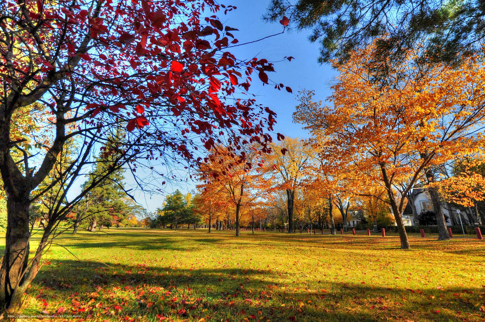 Alberi in autunno paesaggi sfondi desktop gratis sfondi hd for Autunno sfondi desktop