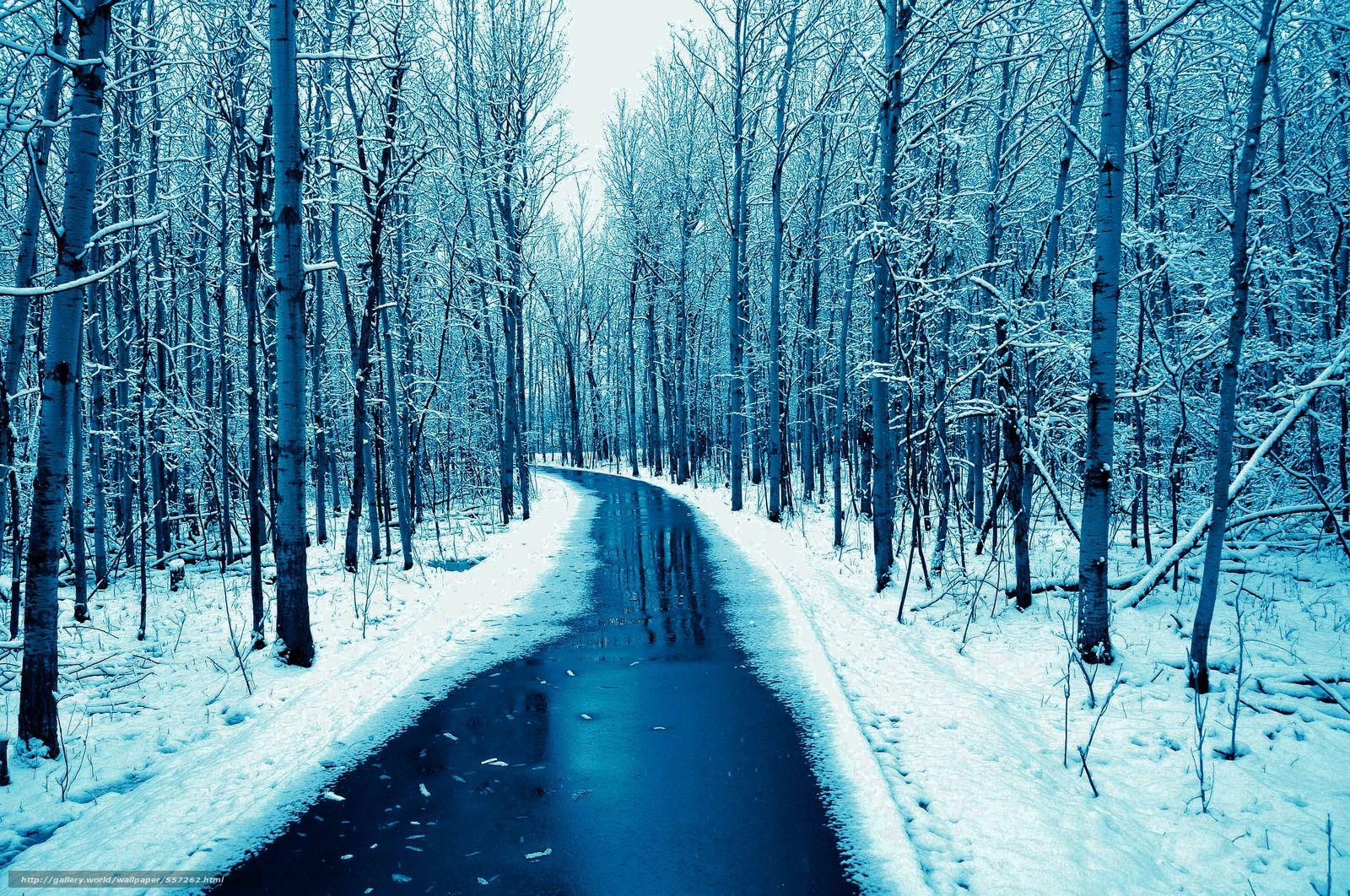 Tlcharger fond d 39 ecran for t petite rivi re paysage for Fond ecran hiver hd
