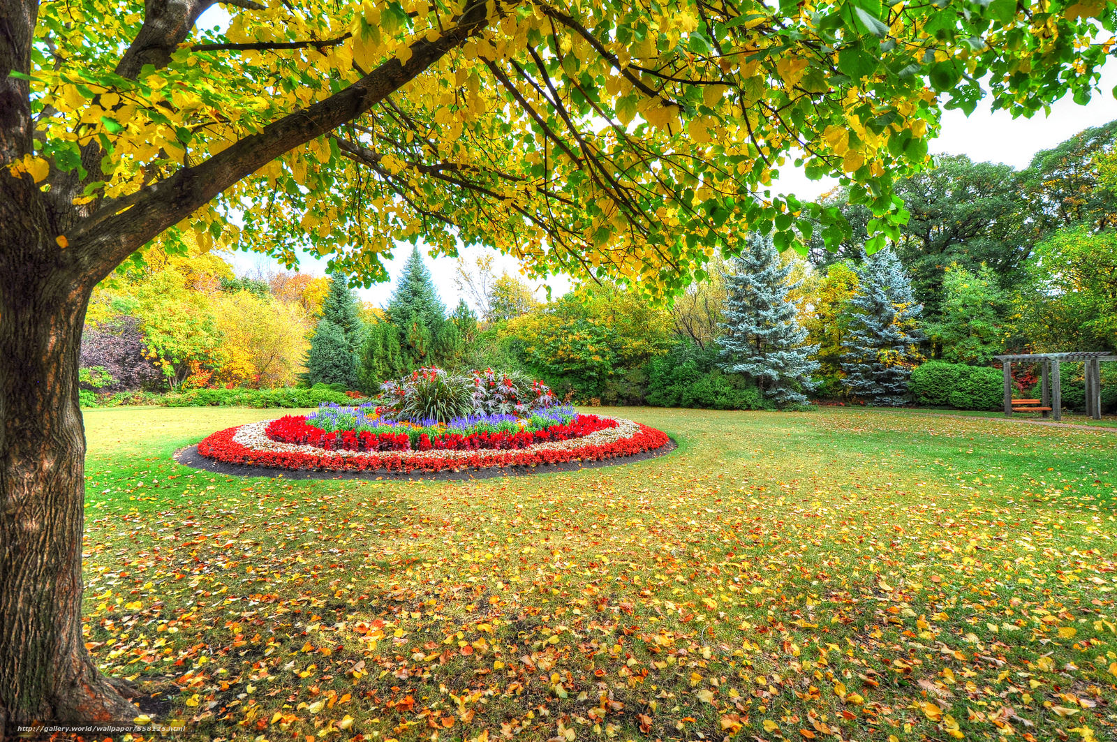 scaricare gli sfondi autunno,  alberi,  parco,  aiuola Sfondi gratis per la risoluzione del desktop 4259x2829 — immagine №558125
