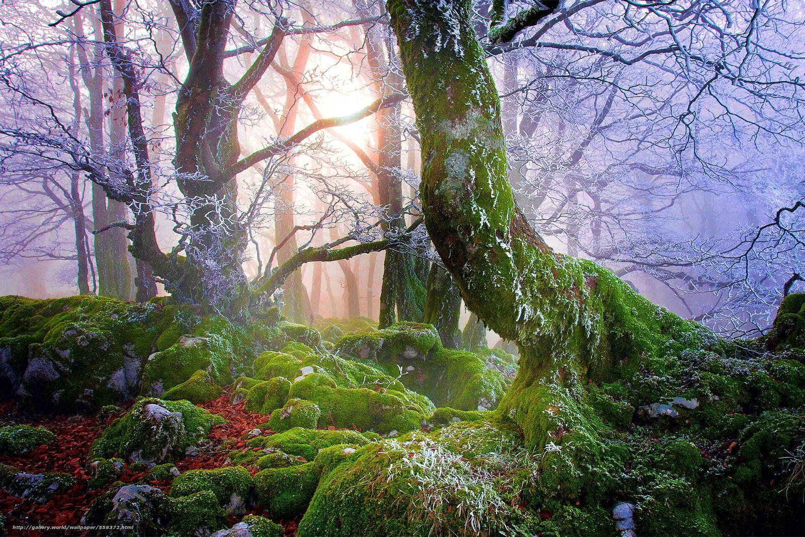 scaricare gli sfondi foresta,  nebbia,  alberi,  pietre Sfondi gratis per la risoluzione del desktop 1920x1280 — immagine №558372