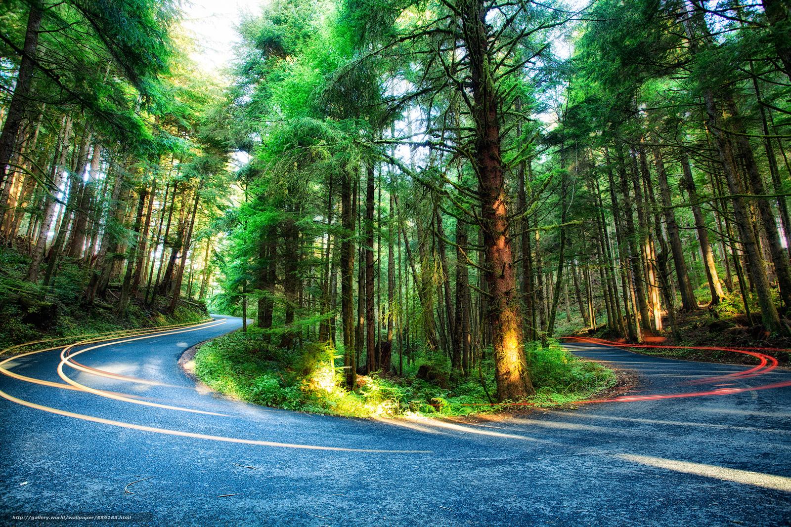 Скачать обои Ecola State Park,  штат Орегон,  лес,  деревья бесплатно для рабочего стола в разрешении 2400x1600 — картинка №559183