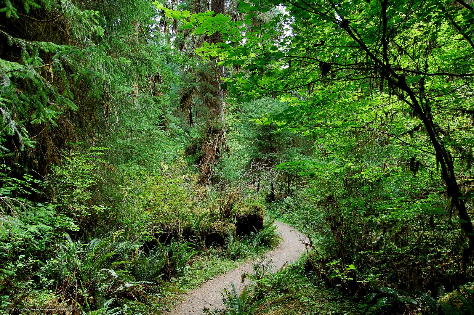 scaricare gli sfondi Rain forest,  Parco nazionale di Olympic,  Washington Sfondi gratis per la risoluzione del desktop 2048x1362 — immagine №559565