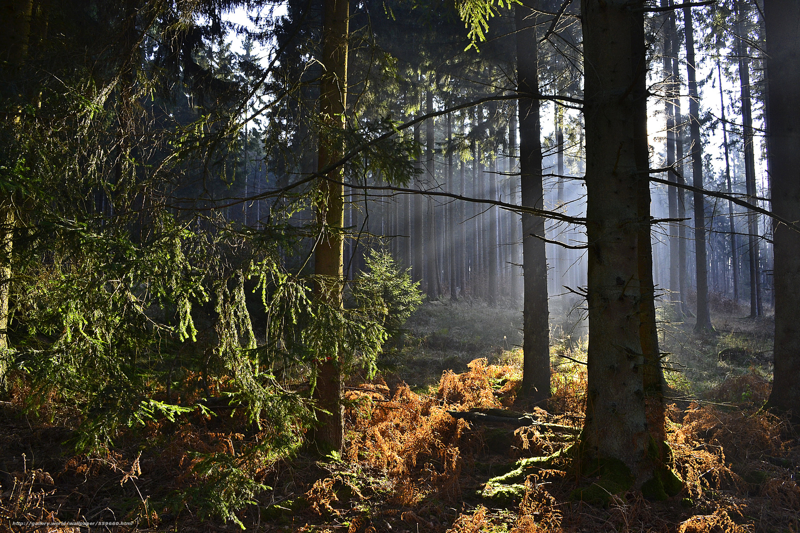 壁紙をダウンロード 森,  木,  霧,  自然 デスクトップの解像度のための無料壁紙 4608x3072 — 絵 №559660