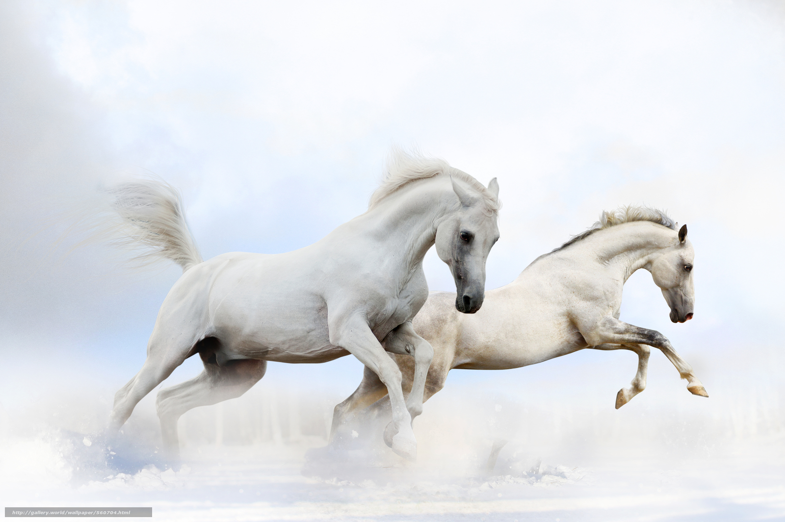 Скачать обои лошади,  кони,  животные бесплатно для рабочего стола в разрешении 8512x5664 — картинка №560704