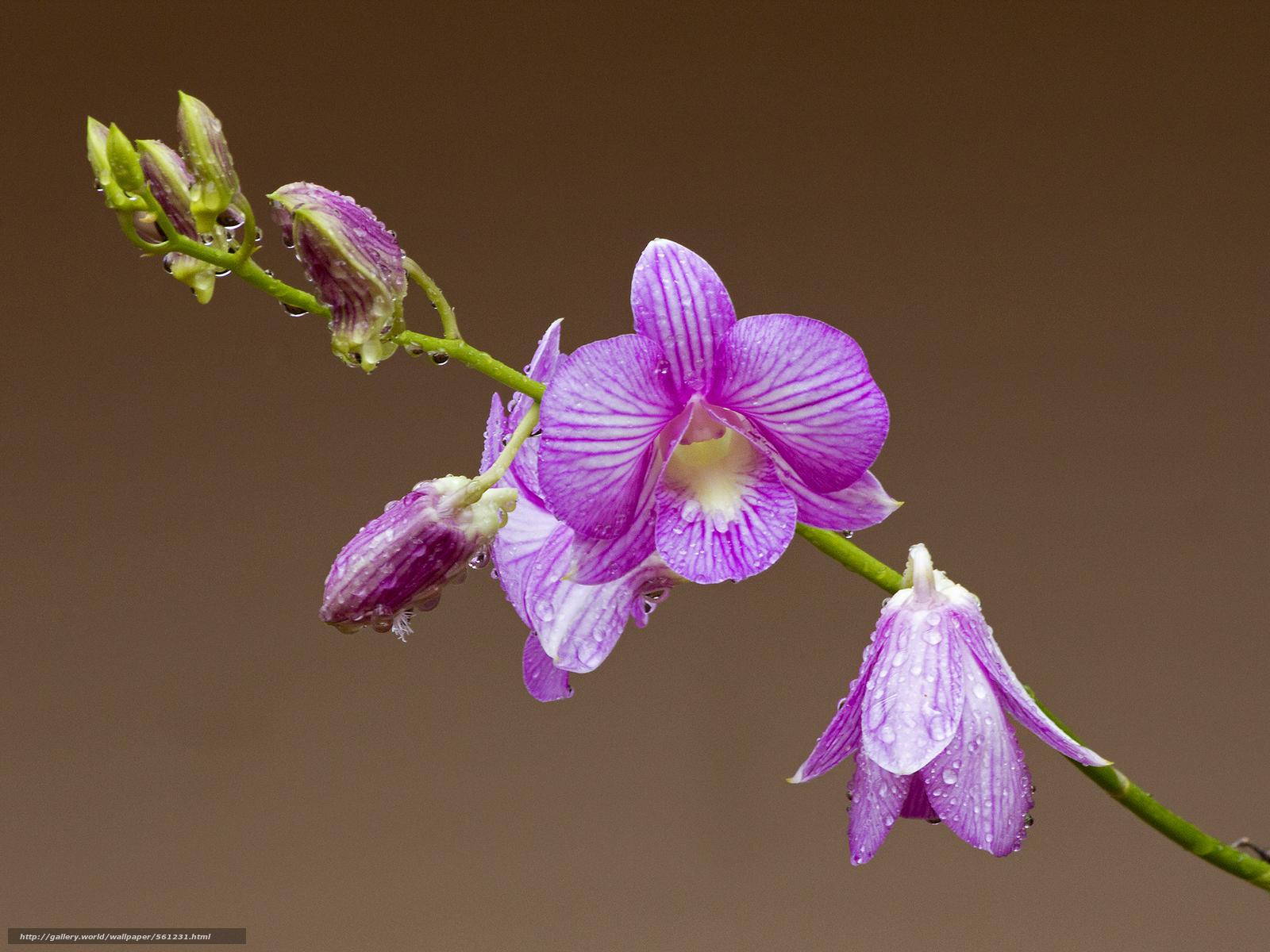 Скачать обои орхидея,  цветок,  флора бесплатно для рабочего стола в разрешении 2048x1536 — картинка №561231