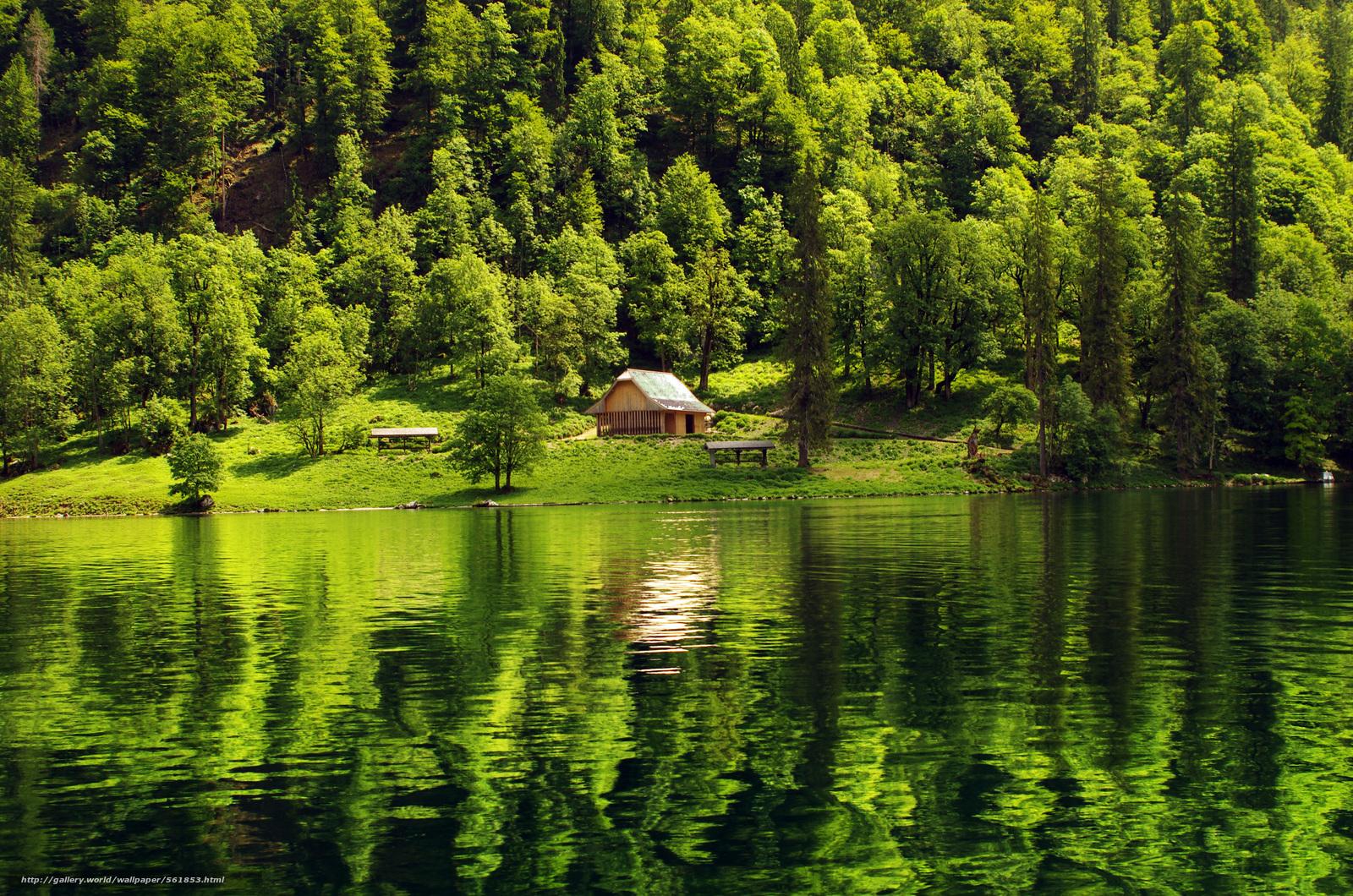 Download wallpaper forest, lake, cabin, landscape free ...