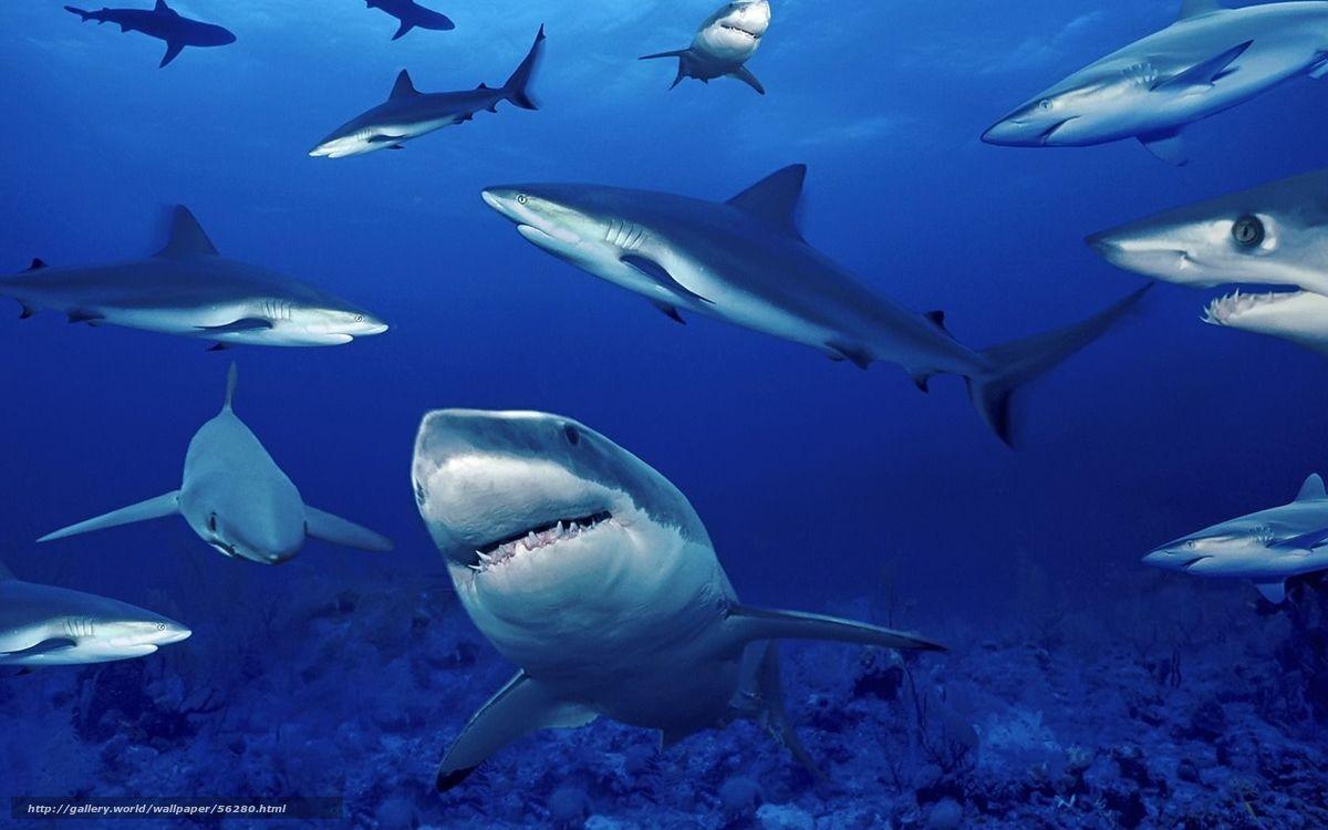 Tlcharger Fond D Ecran Mer Requin Profondeur Fonds D Ecran