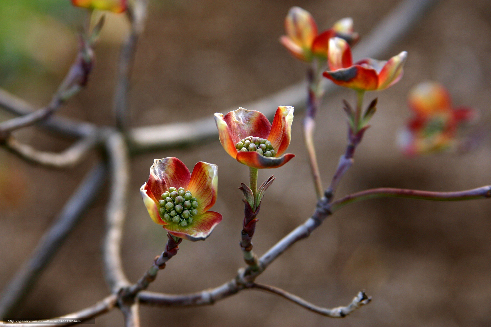 Скачать обои ветки,  цветы,  макро бесплатно для рабочего стола в разрешении 3072x2048 — картинка №563282