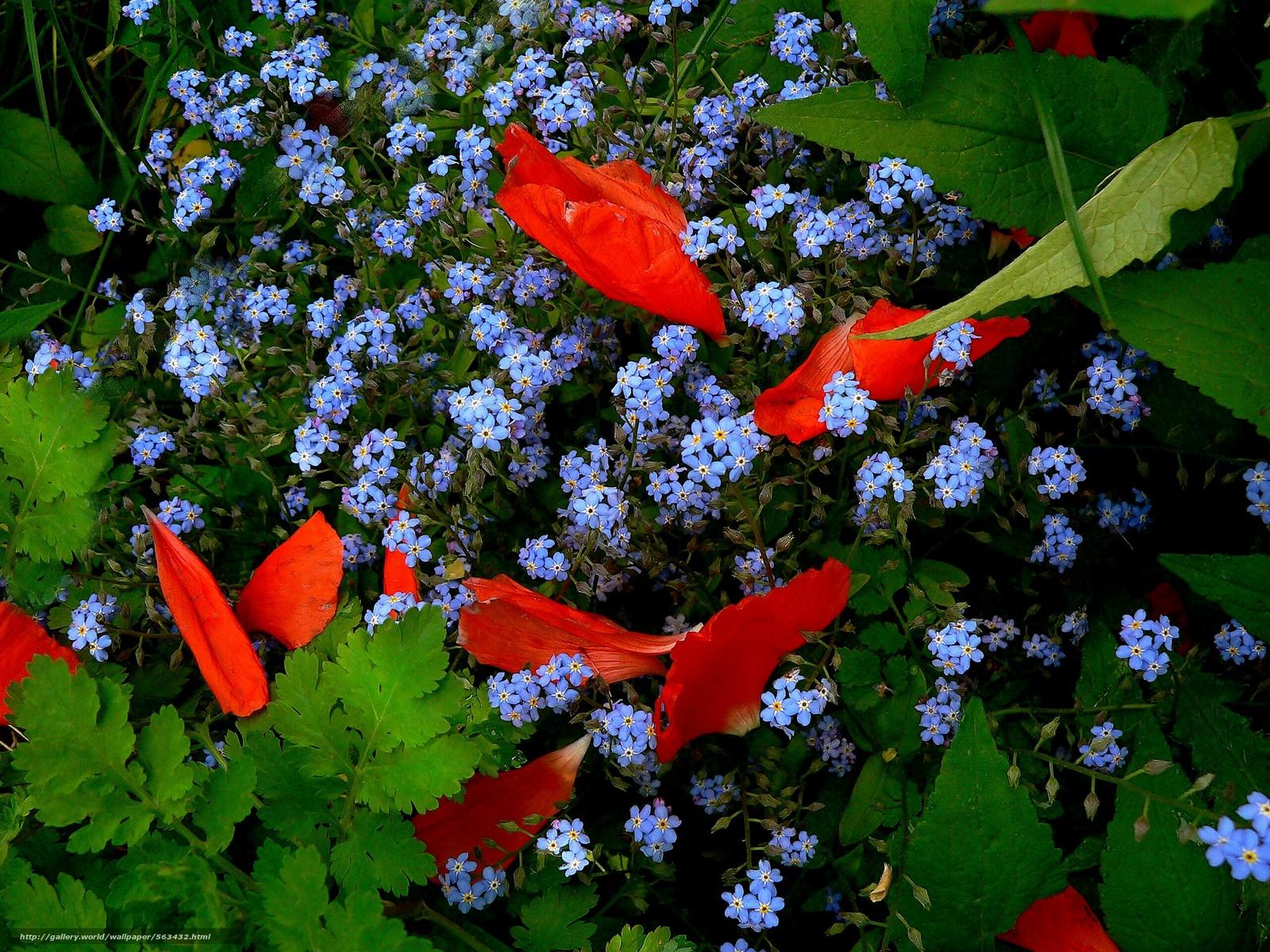 scaricare gli sfondi aiuola,  Fiori,  flora Sfondi gratis per la risoluzione del desktop 2560x1920 — immagine №563432