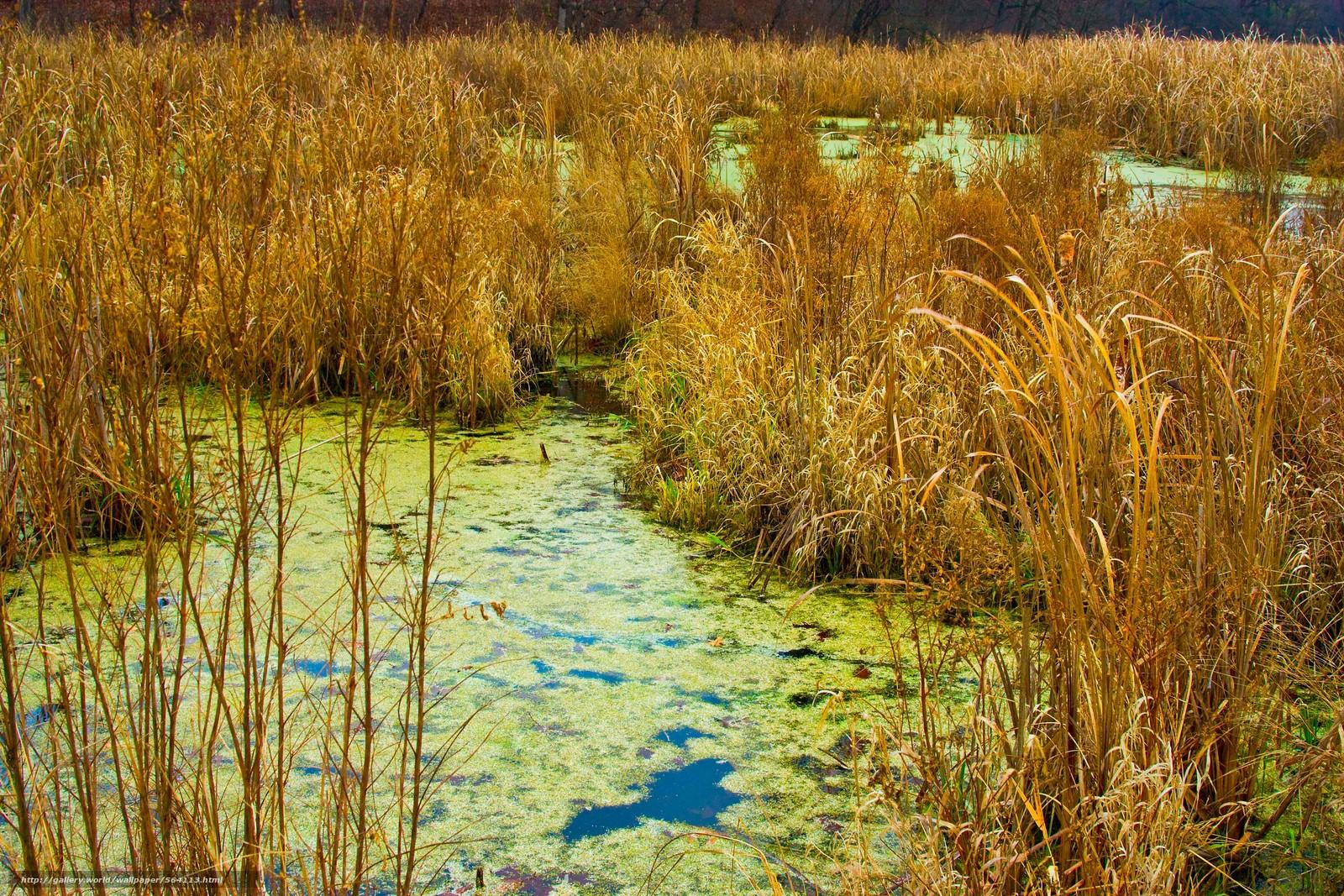 下载壁纸 秋,  草,  沼泽 免费为您的桌面分辨率的壁纸 4272x2848 — 图片 №564113
