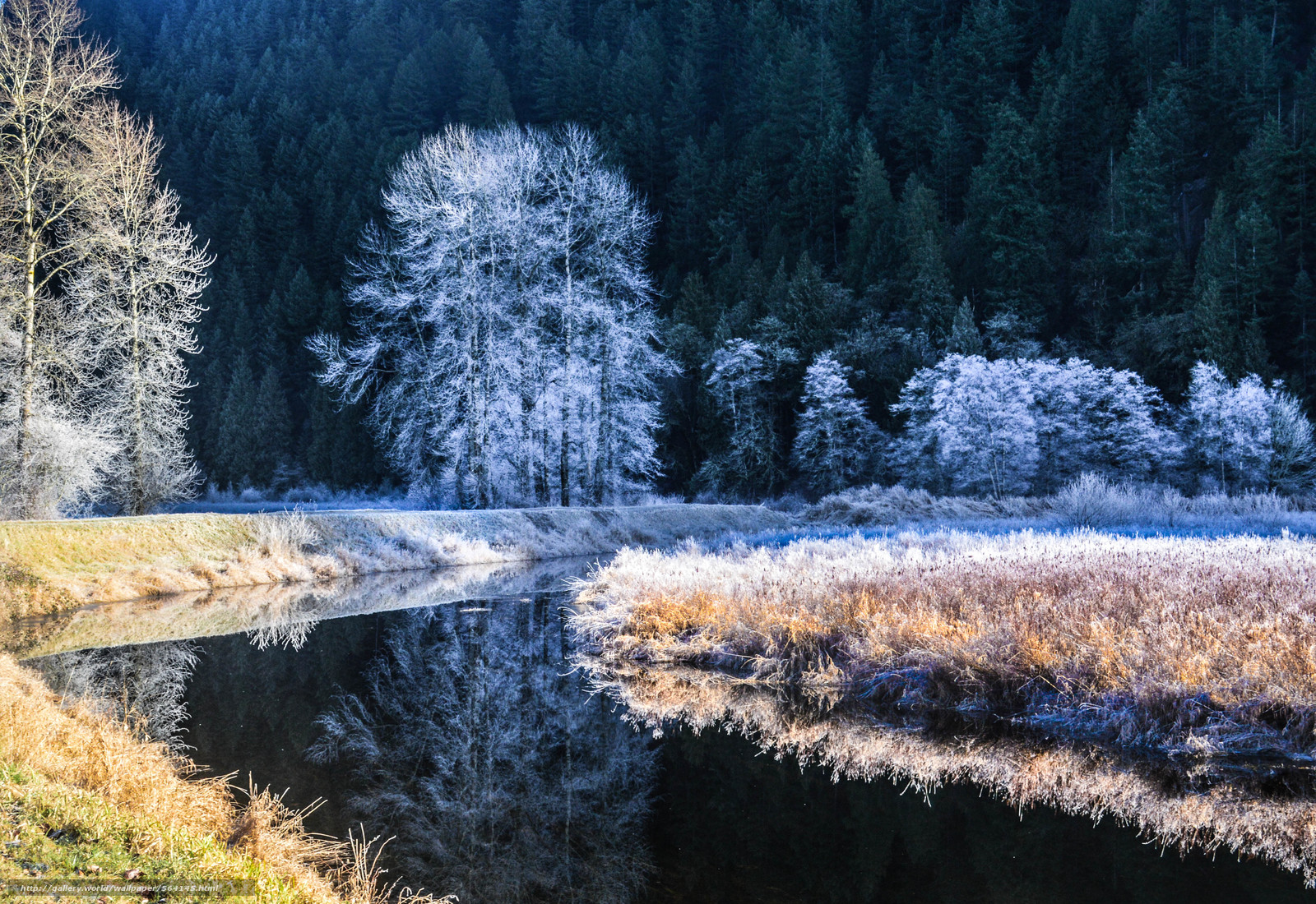 下载壁纸 森林,  河,  树,  霜 免费为您的桌面分辨率的壁纸 4869x3346 — 图片 №564145