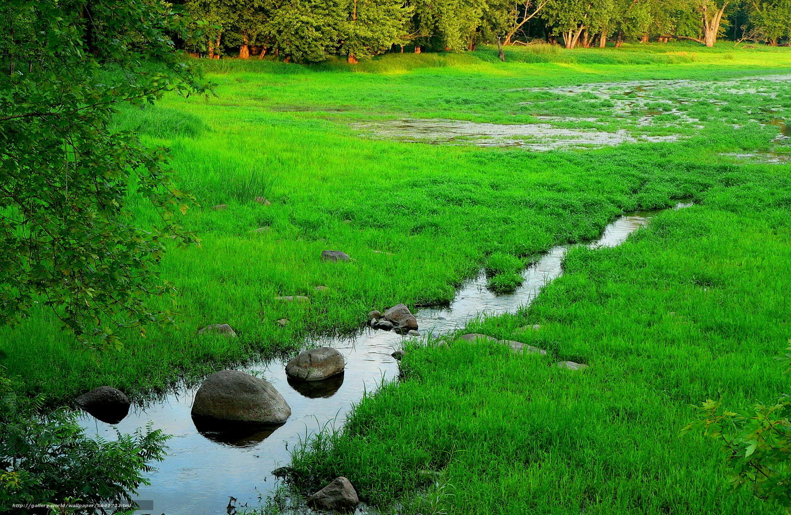 scaricare gli sfondi torrente,  palude,  alberi,  natura Sfondi gratis per la risoluzione del desktop 2514x1637 — immagine №564172