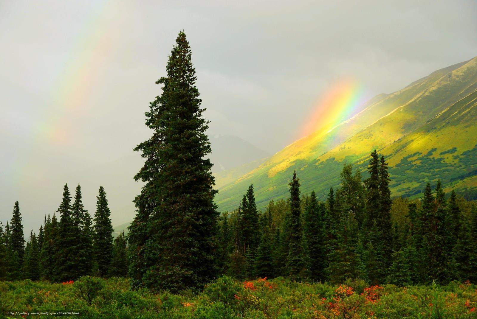 Скачать обои горы,  лес,  деревья,  радуга бесплатно для рабочего стола в разрешении 3872x2592 — картинка №564939