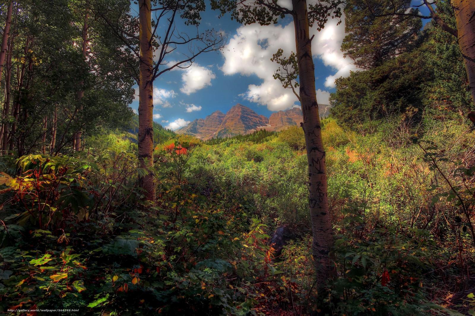 下载壁纸 森林,  树,  山,  天空 免费为您的桌面分辨率的壁纸 5183x3455 — 图片 №566265