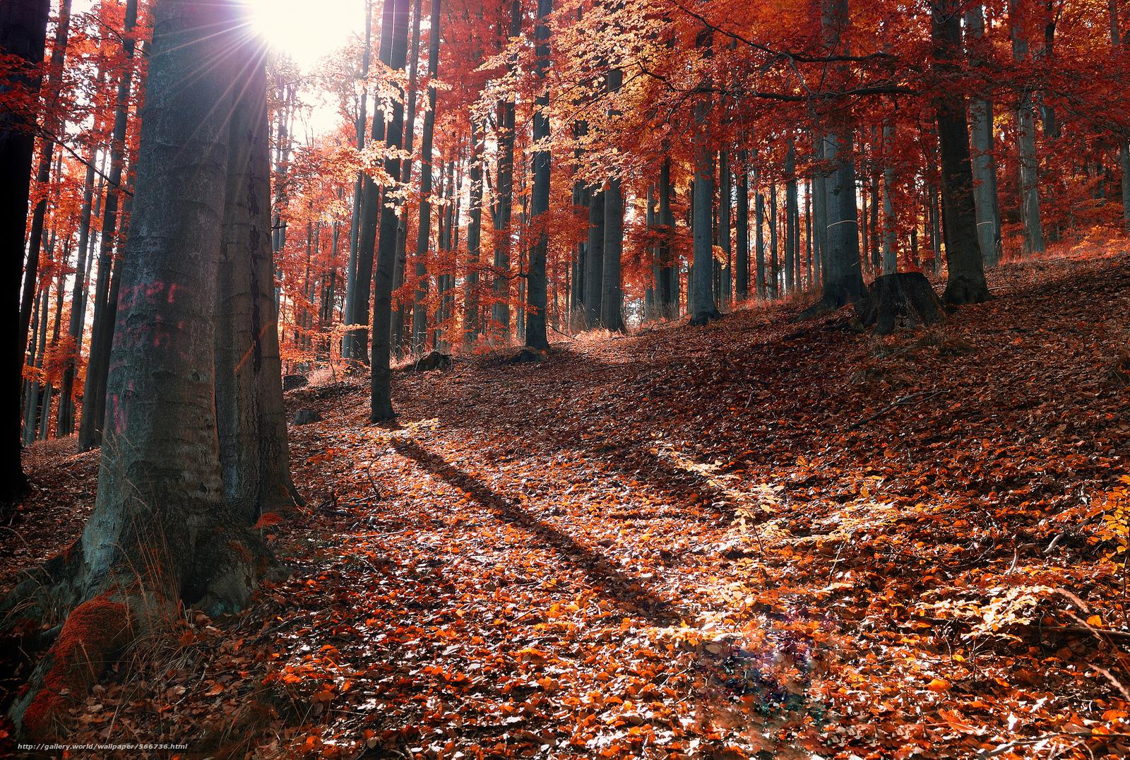 scaricare gli sfondi fogliame,  foresta,  Caduto,  sole Sfondi gratis per la risoluzione del desktop 2048x1377 — immagine №566736