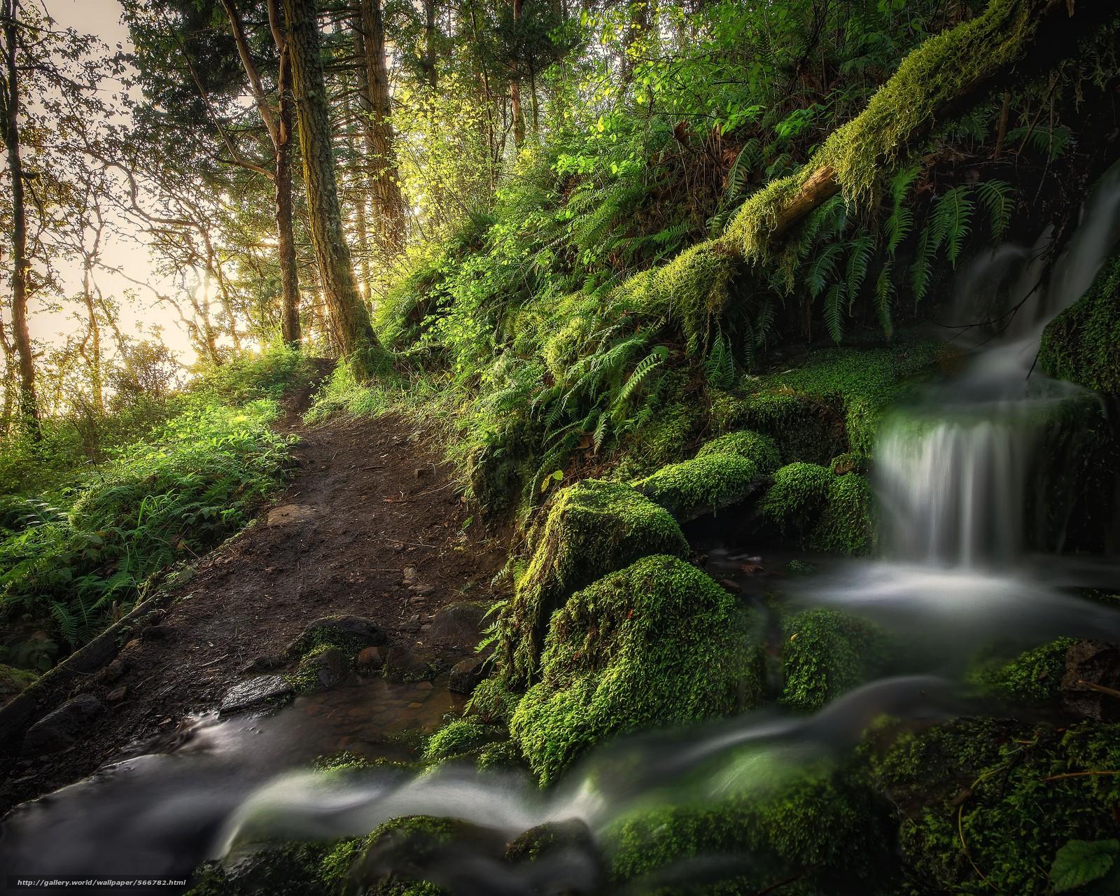 下载壁纸 森林,  树,  瀑布,  性质 免费为您的桌面分辨率的壁纸 4319x3455 — 图片 №566782