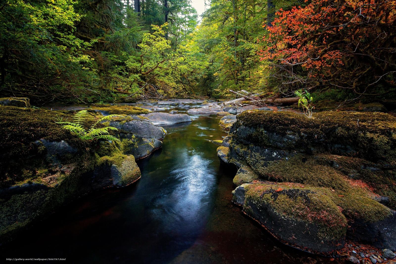 scaricare gli sfondi foresta,  alberi,  pietre,  piccolo fiume Sfondi gratis per la risoluzione del desktop 4961x3308 — immagine №566797
