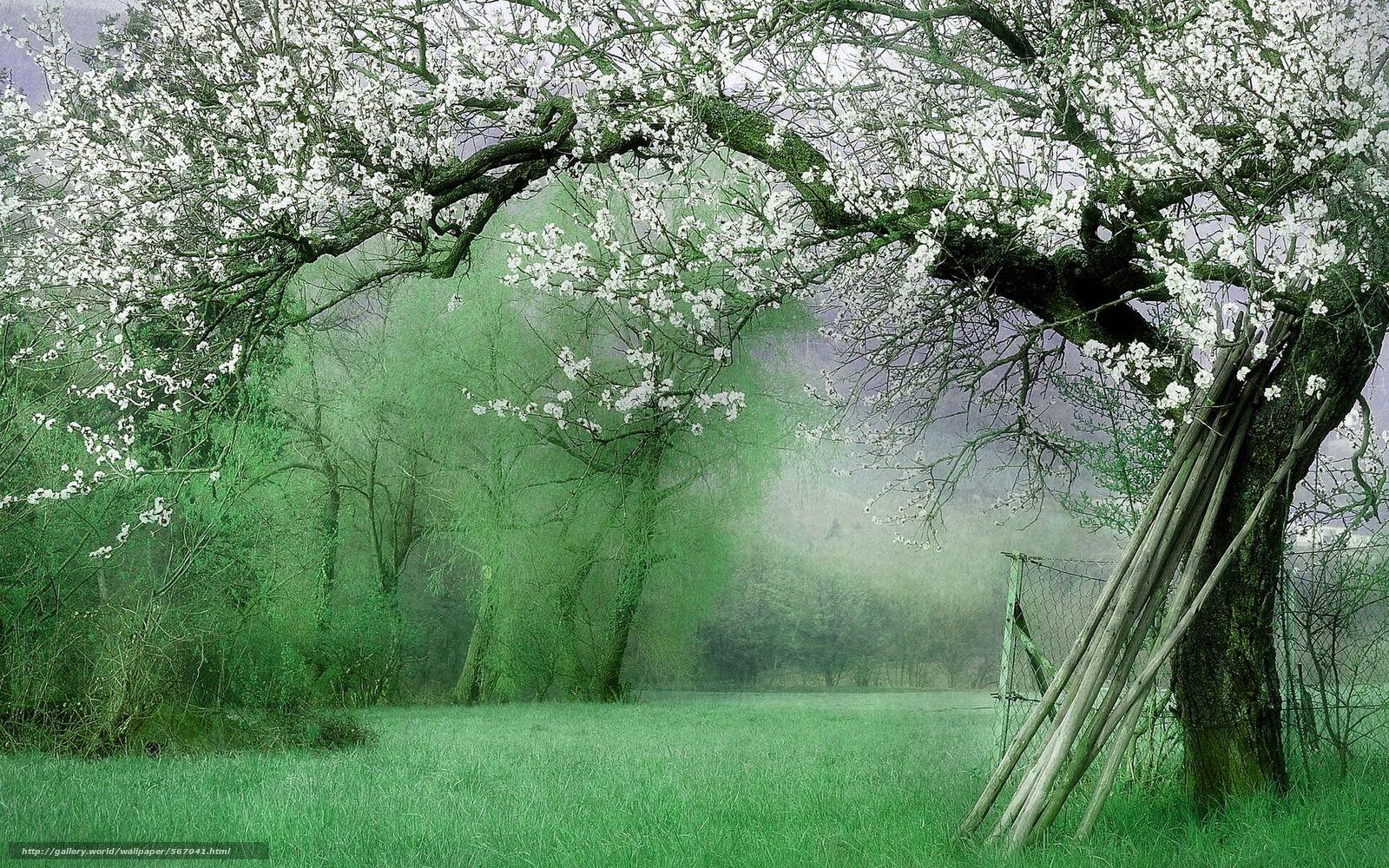 Scaricare gli sfondi primavera paesaggio giardino for Immagini per desktop natura