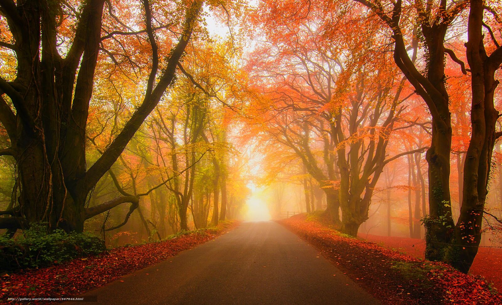 Download wallpaper forest,  fog,  park,  autumn free desktop wallpaper in the resolution 2048x1243 — picture №567046