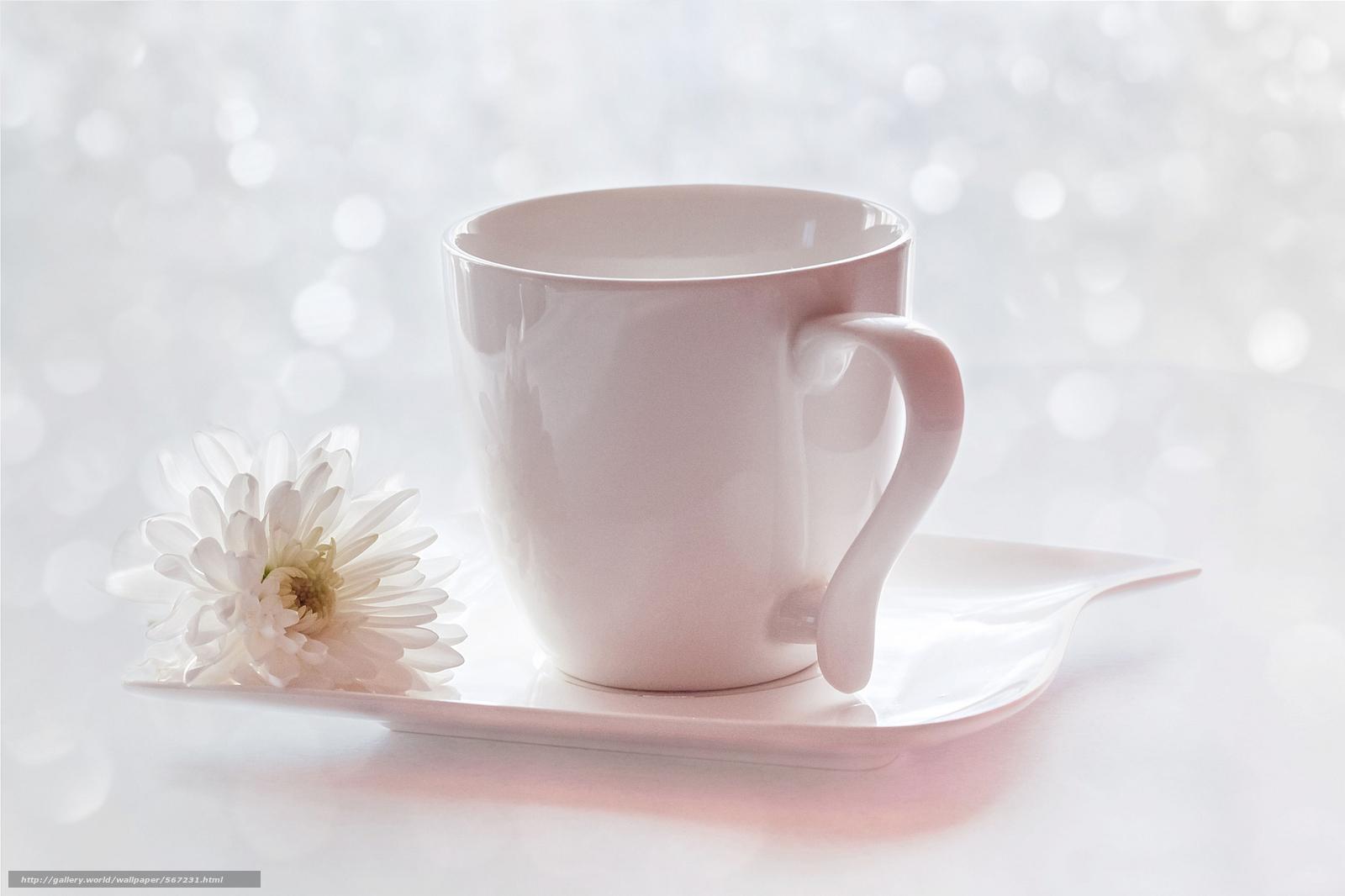 scaricare gli sfondi fiore,  tazza,  crisantemo,  piattino Sfondi gratis per la risoluzione del desktop 2048x1365 — immagine №567231