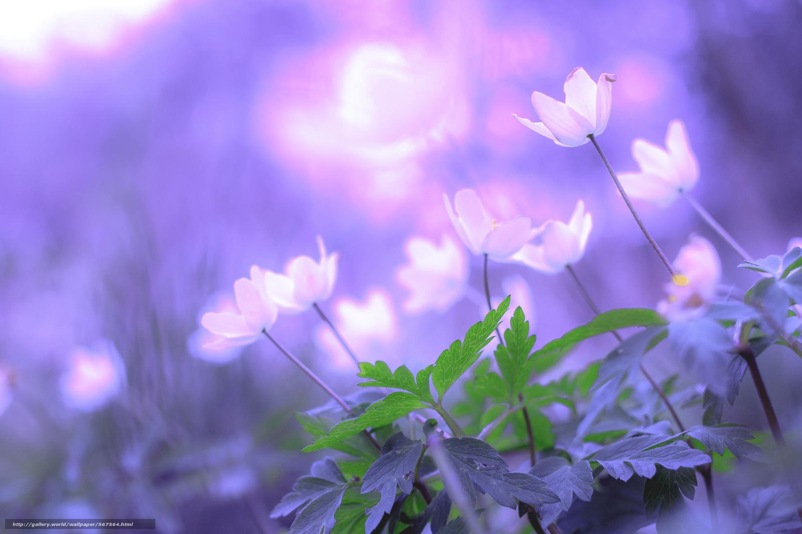 Descargar gratis bokeh,  Flores,  follaje Fondos de escritorio en la resolucin 2048x1365 — imagen №567564