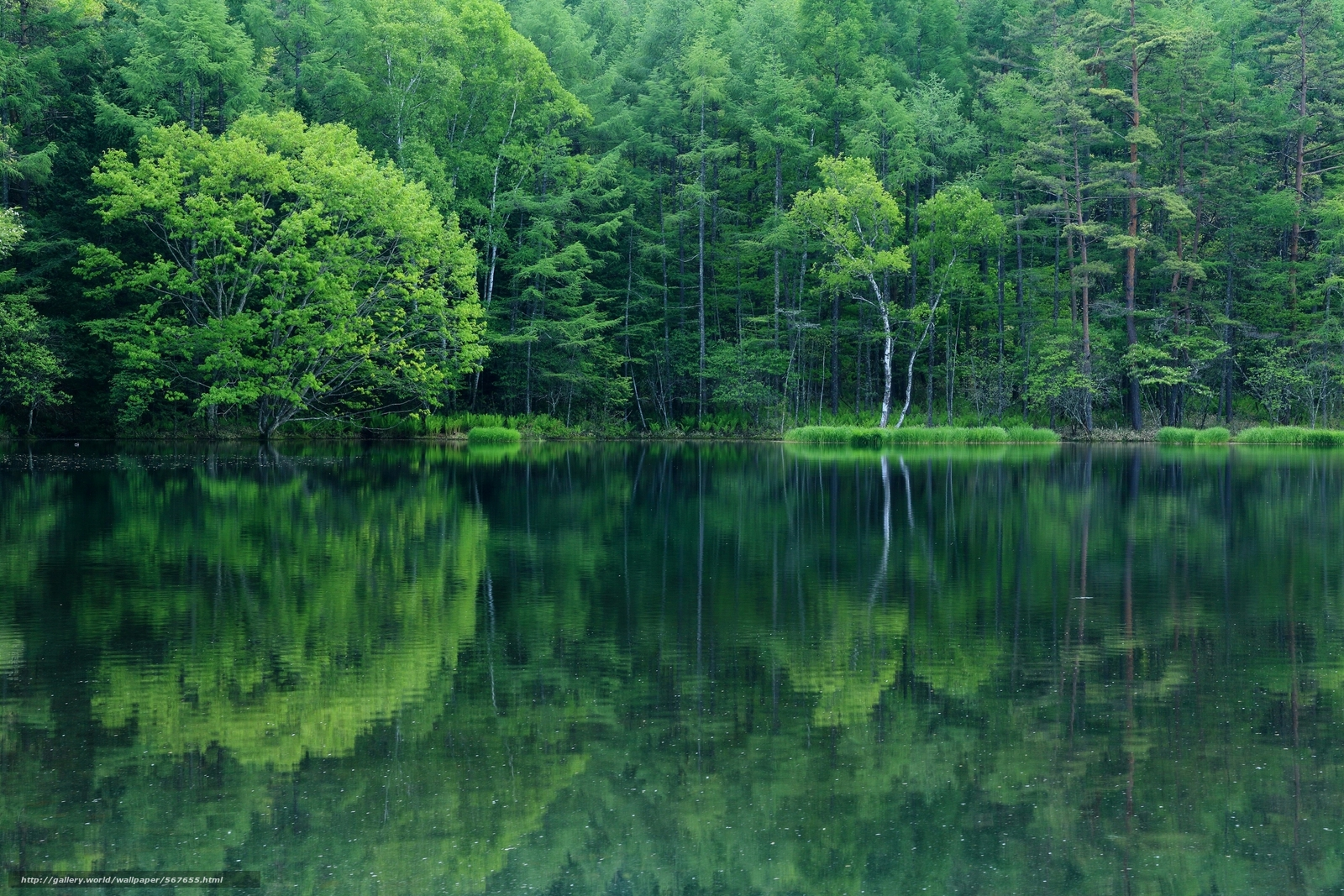 Download wallpaper reflection,  lake,  trees,  forest free desktop wallpaper in the resolution 2800x1867 — picture №567655