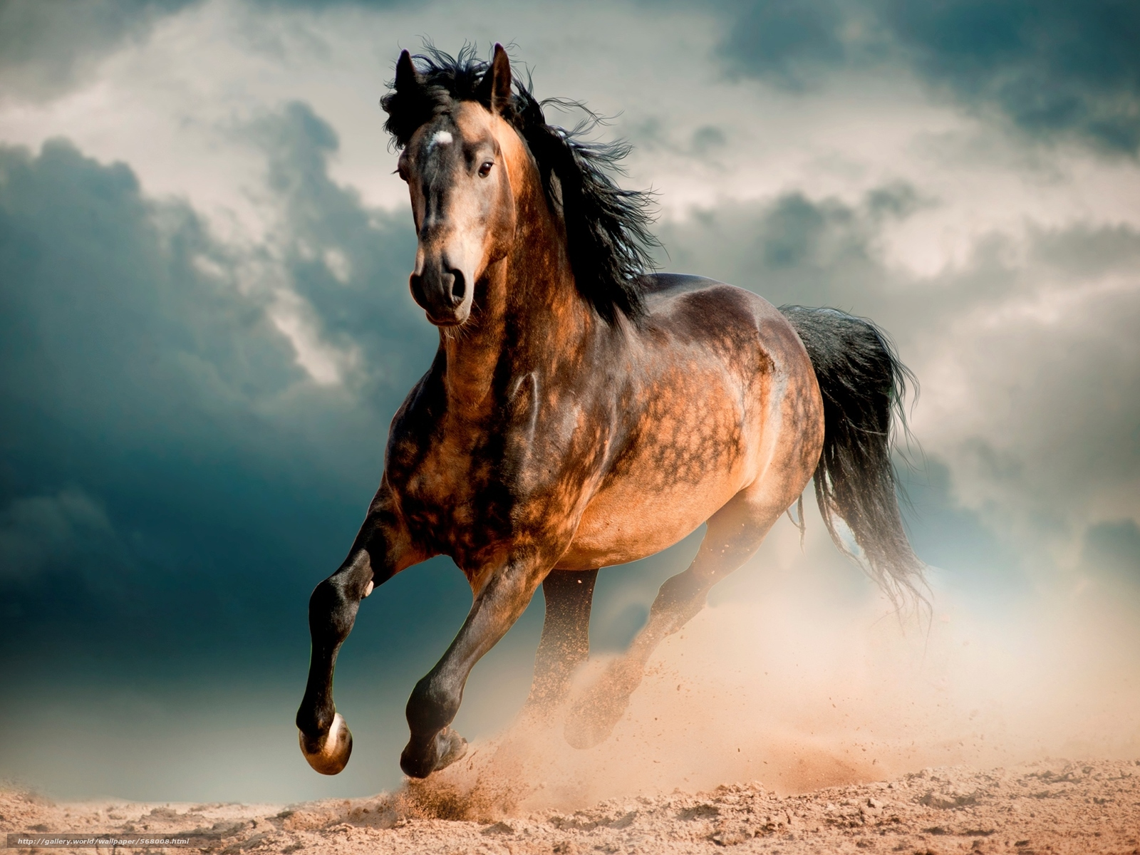 Running horses wallpaper desktop