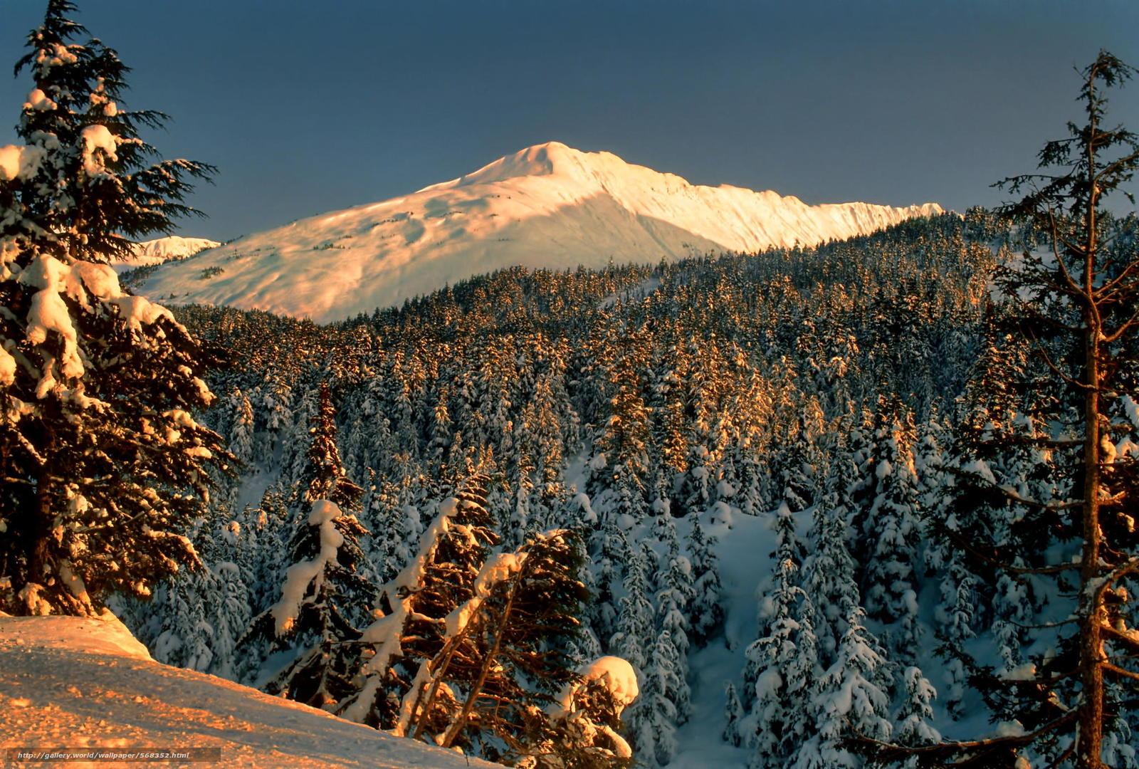 scaricare gli sfondi nevicata,  foresta,  paesaggio,  parco Sfondi gratis per la risoluzione del desktop 2048x1383 — immagine №568352