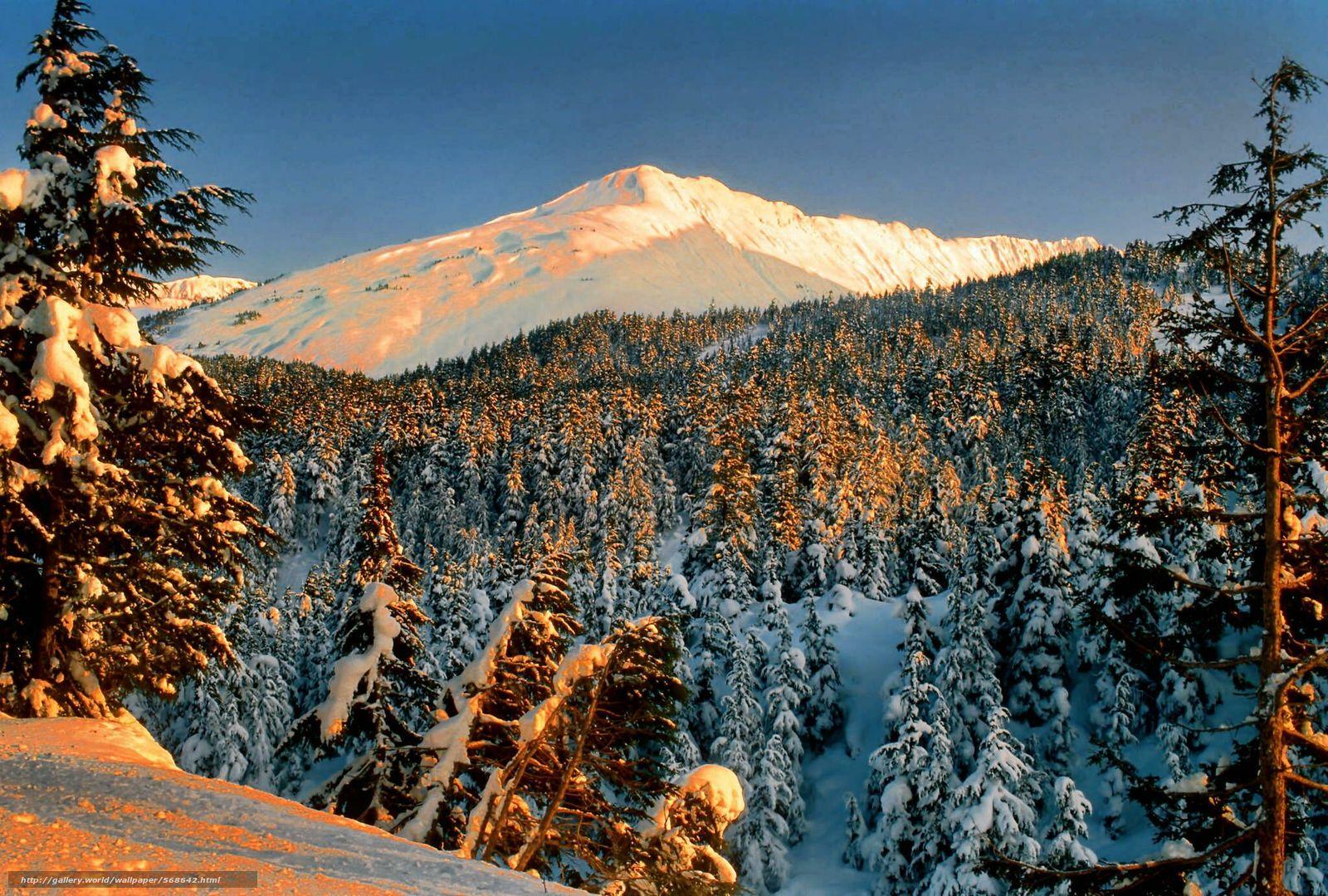 scaricare gli sfondi nevicata,  foresta,  paesaggio,  parco Sfondi gratis per la risoluzione del desktop 2048x1383 — immagine №568642
